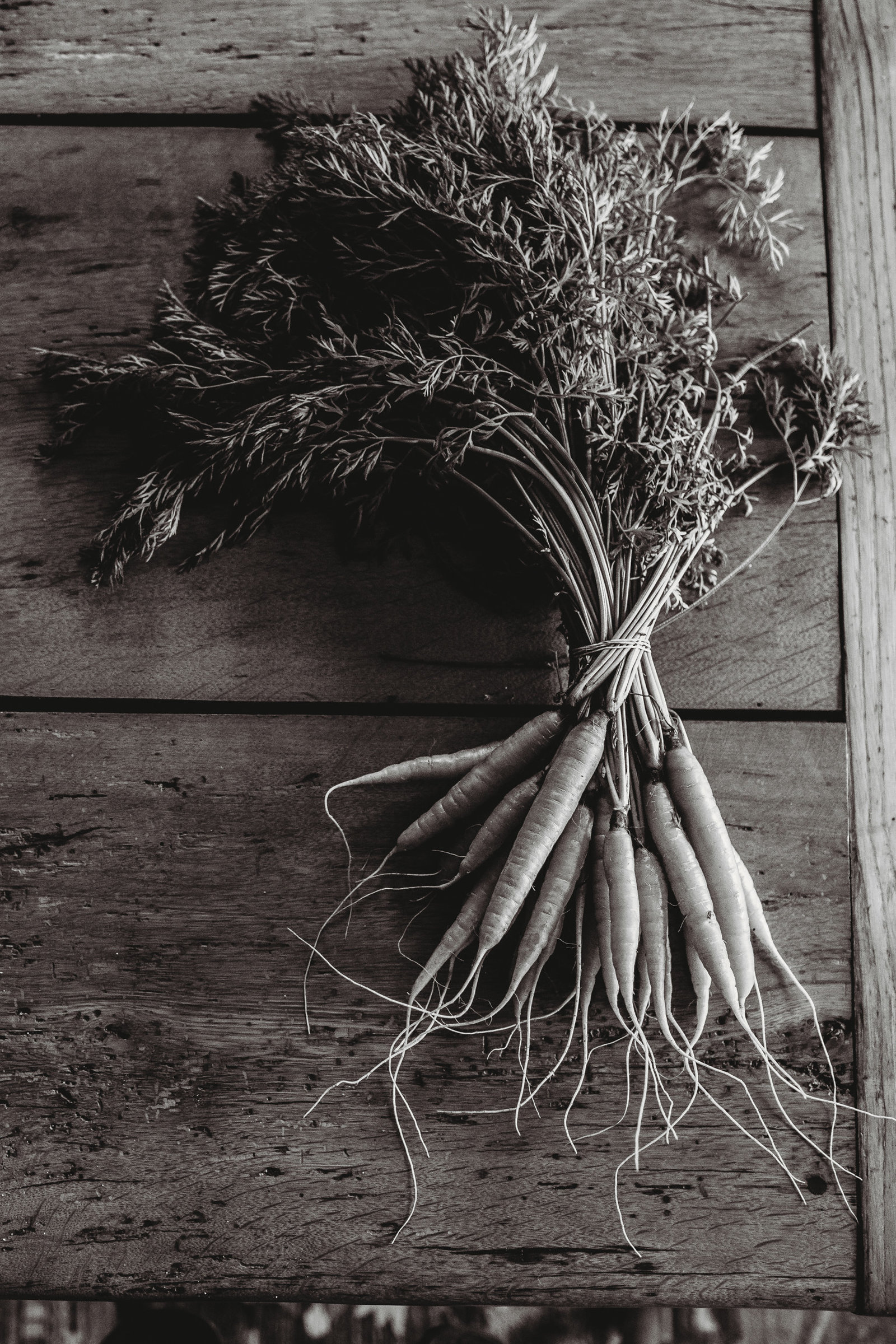 dramatic image of a bunch of carrots for food styled session in framingham