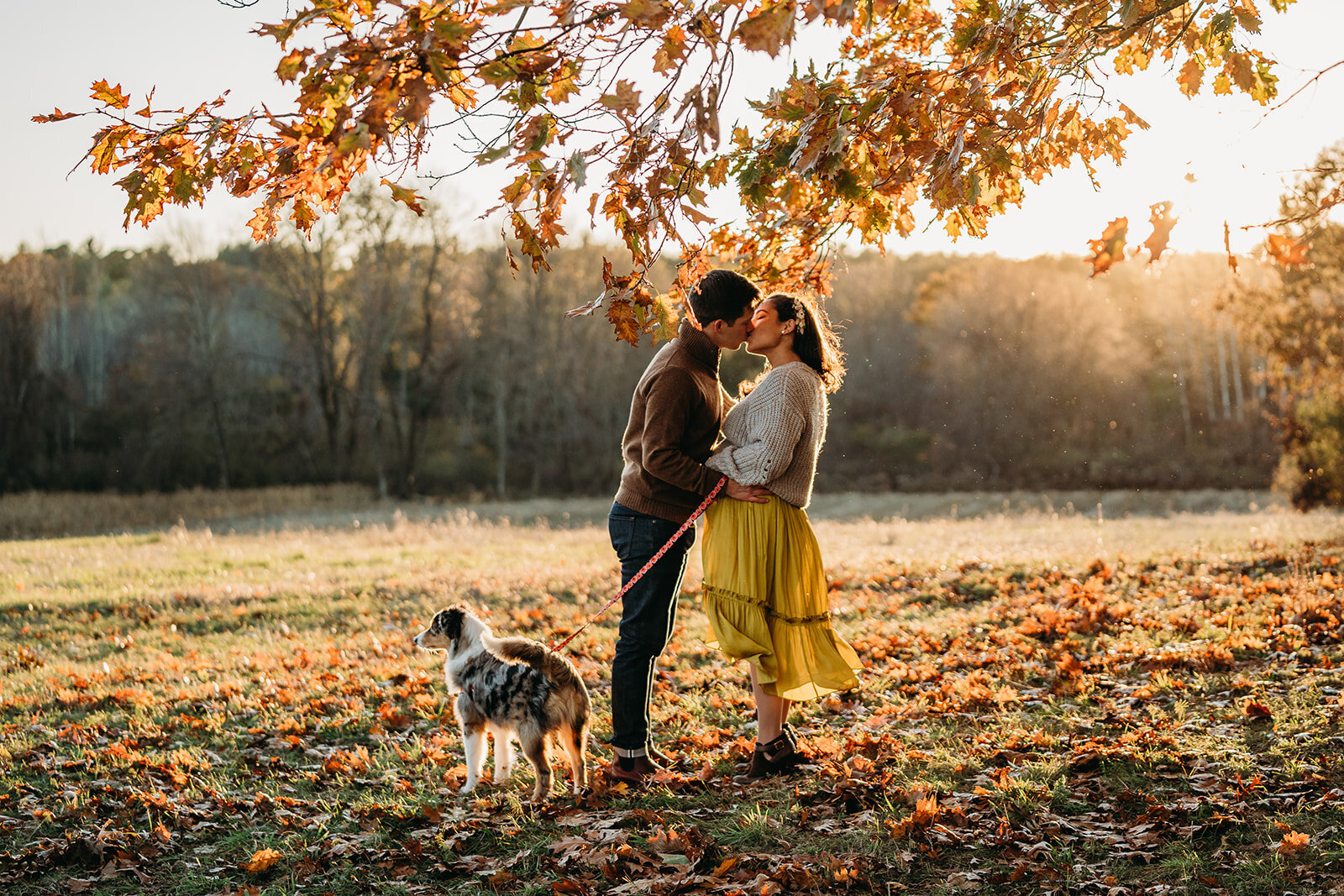 pregnant couple kiss under foliage with dog