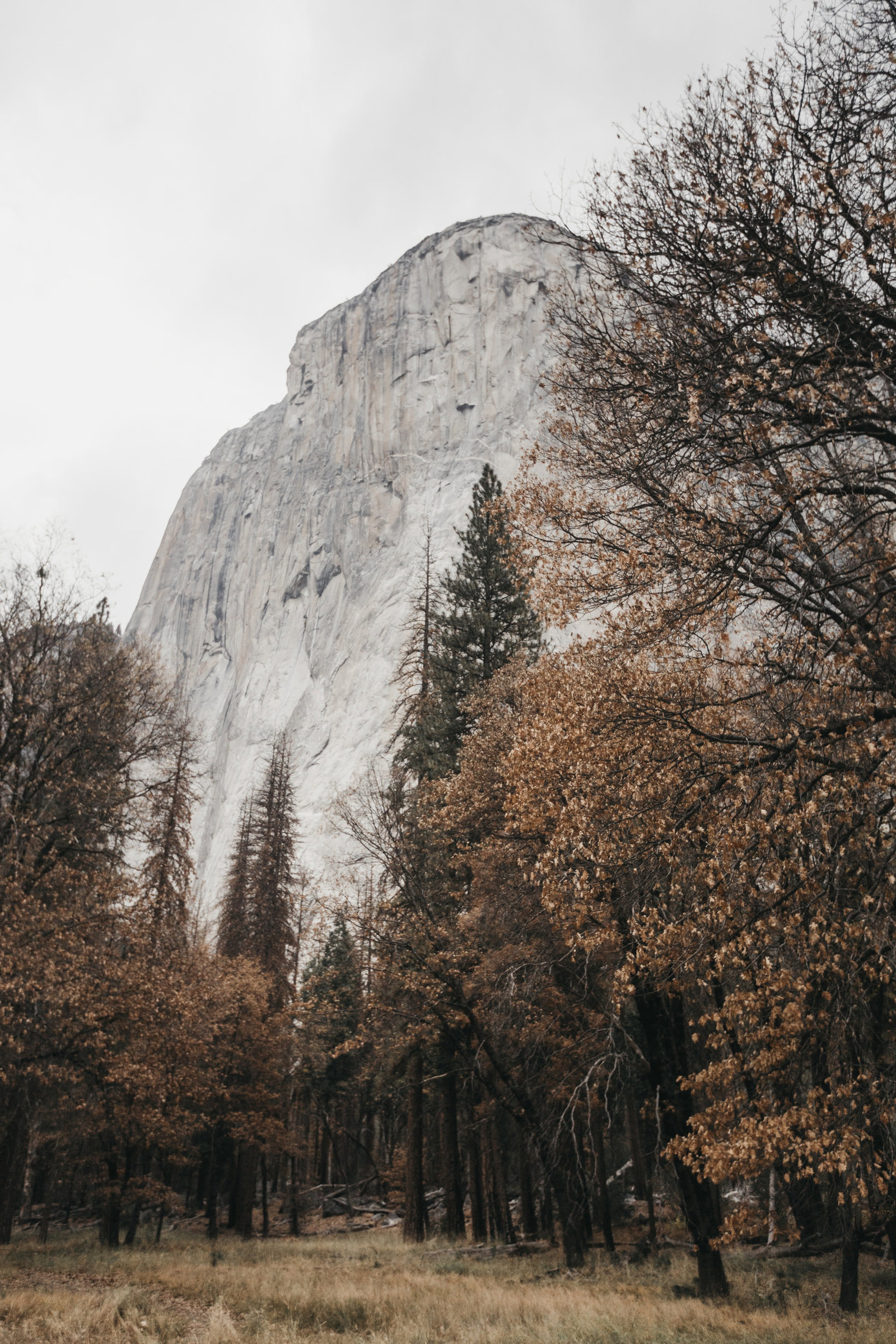 athena-and-camron-yosemite-elopement-wedding-photographer-elegent-valley-wedding33
