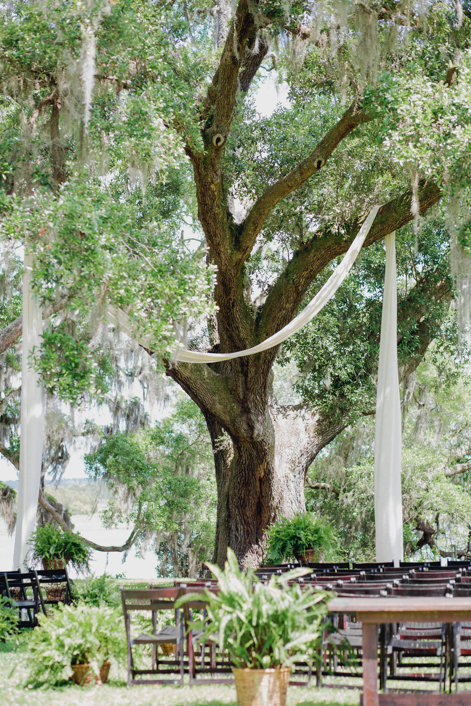 Sashes are draped over oak tree, Old Wide Awake Plantation, Charleston Wedding Photography.