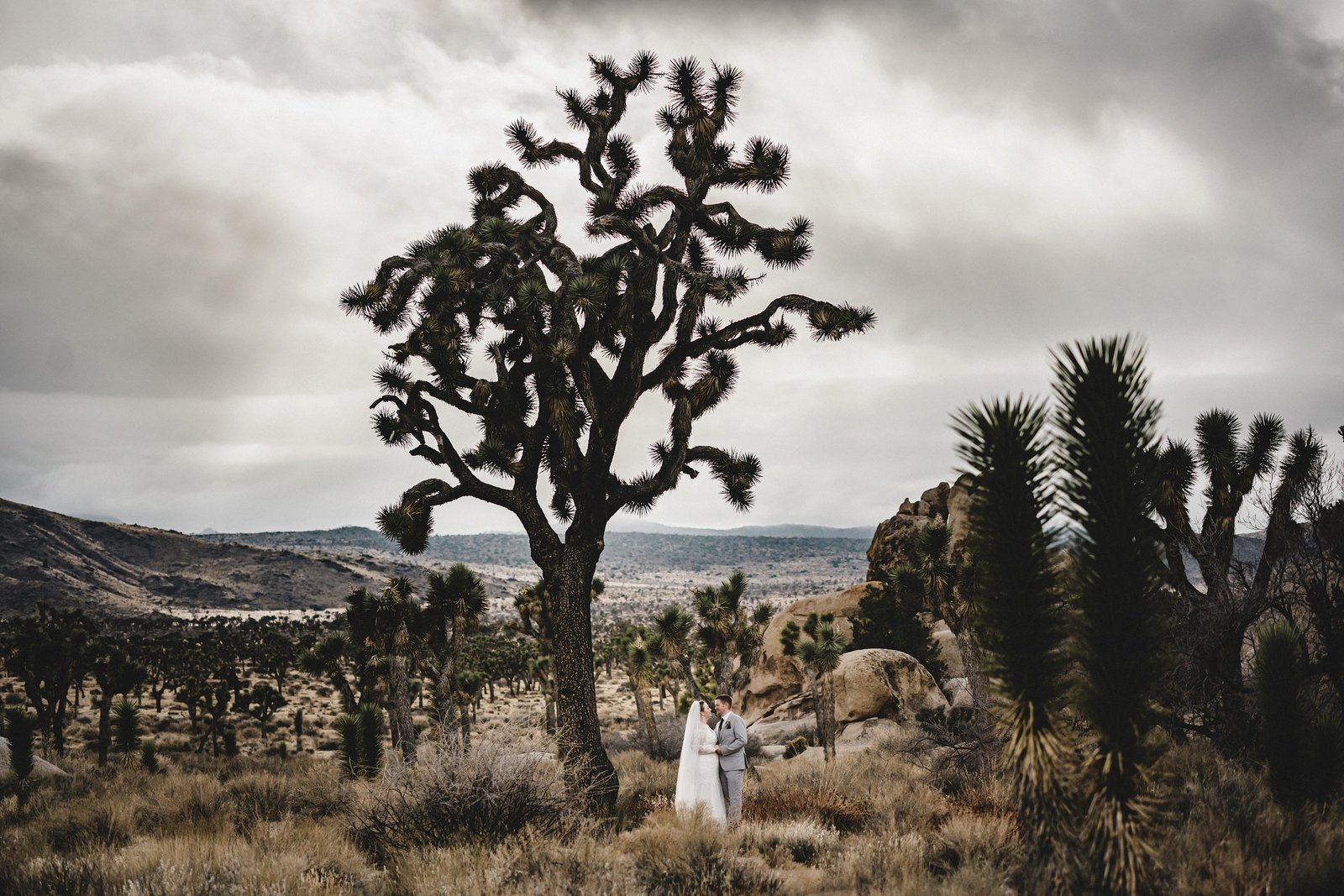 Joshua Tree Elopement Yuca Valley Wedding Photographer 021