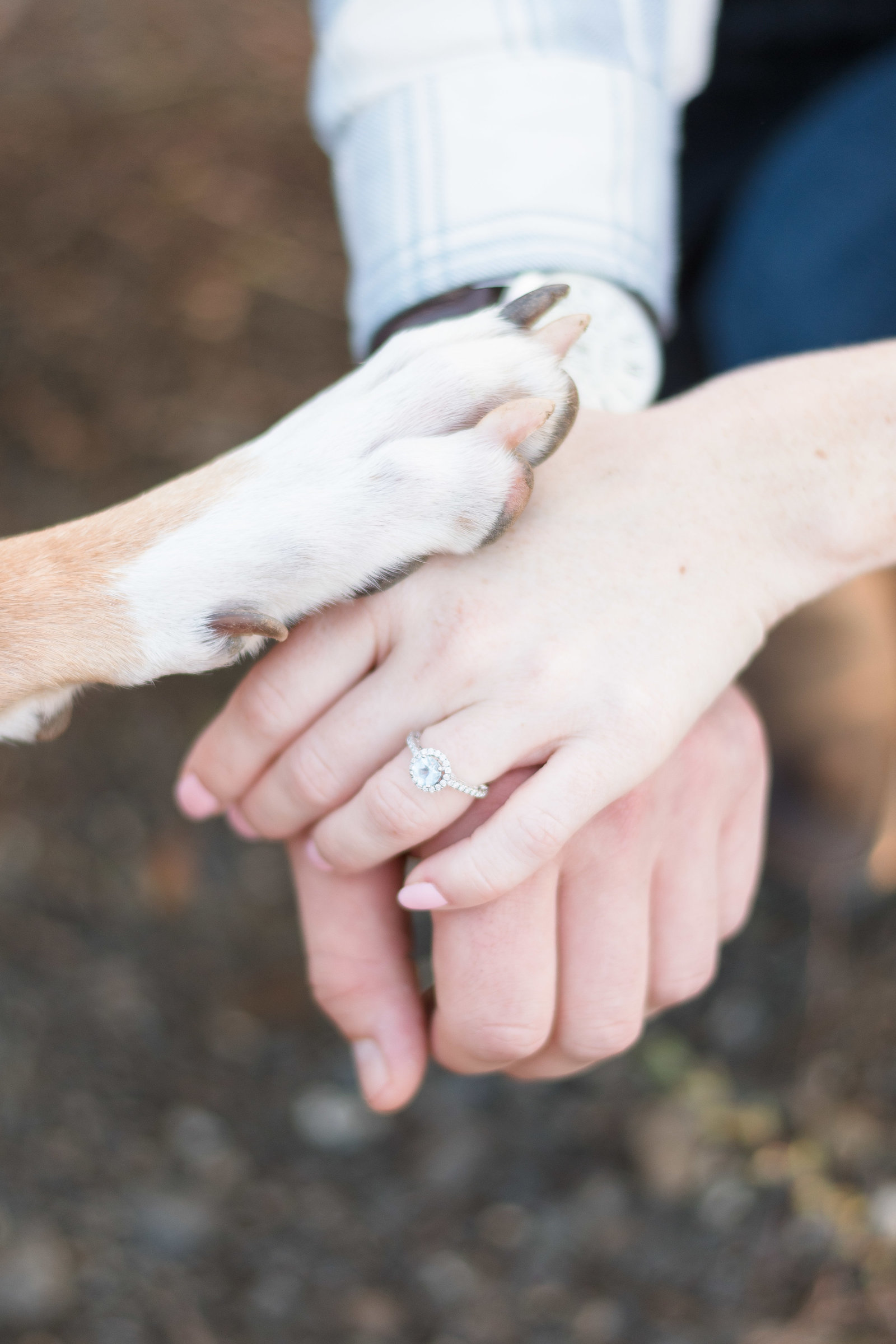 Charlotte engagement photographer shot of couple holding hands with puppy and wedding ring in south park
