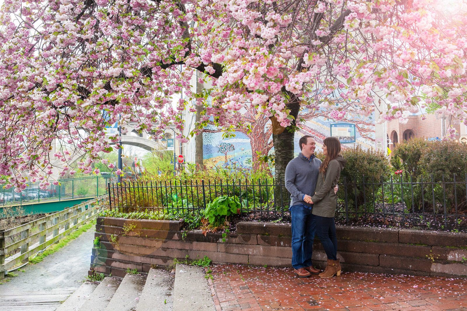 Engaged couple under cherry blossom tree