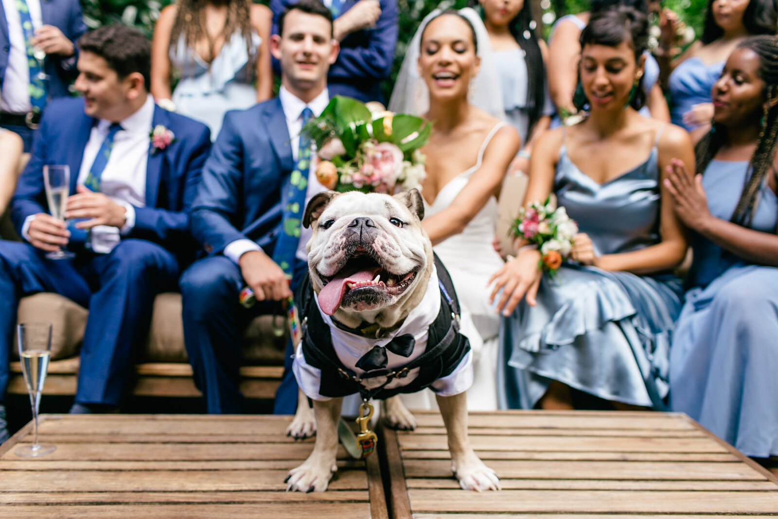 wedding bulldog in suit