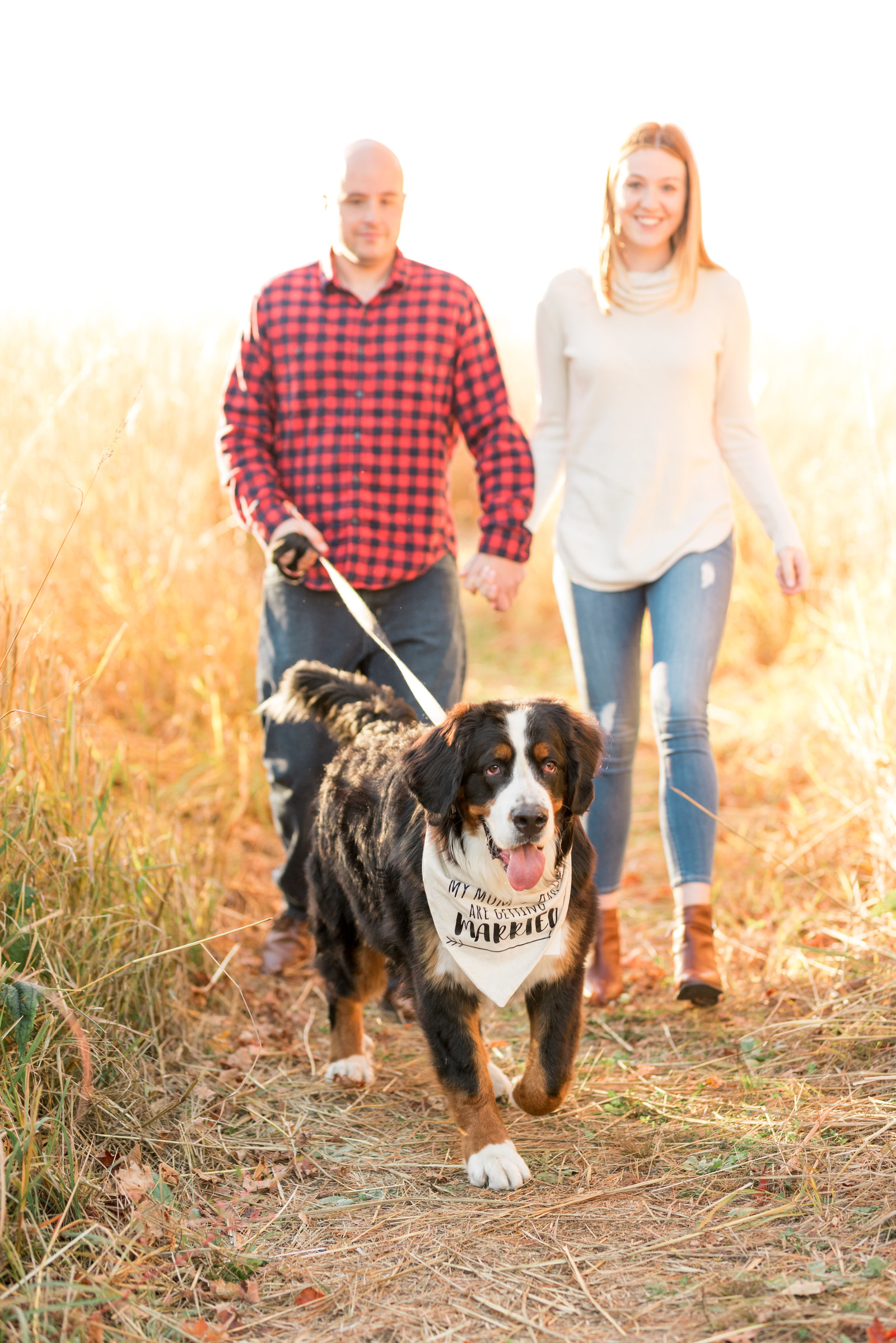 Bernese Mountain Dog Engagement