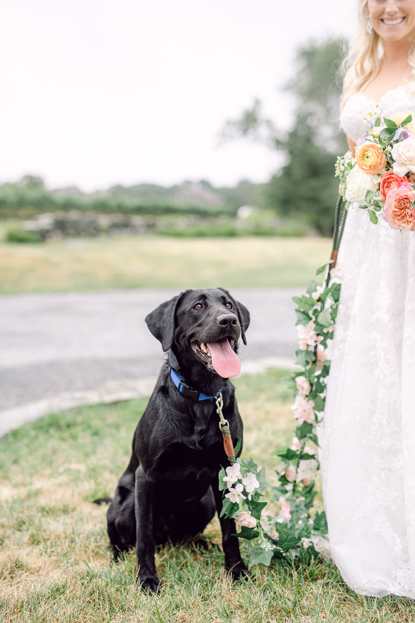 wedding_dog_2