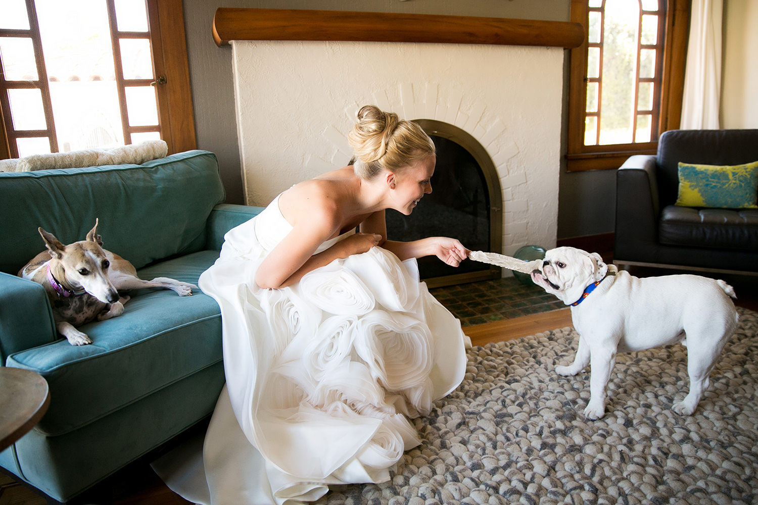 Cute moment between bride and her english bulldog.