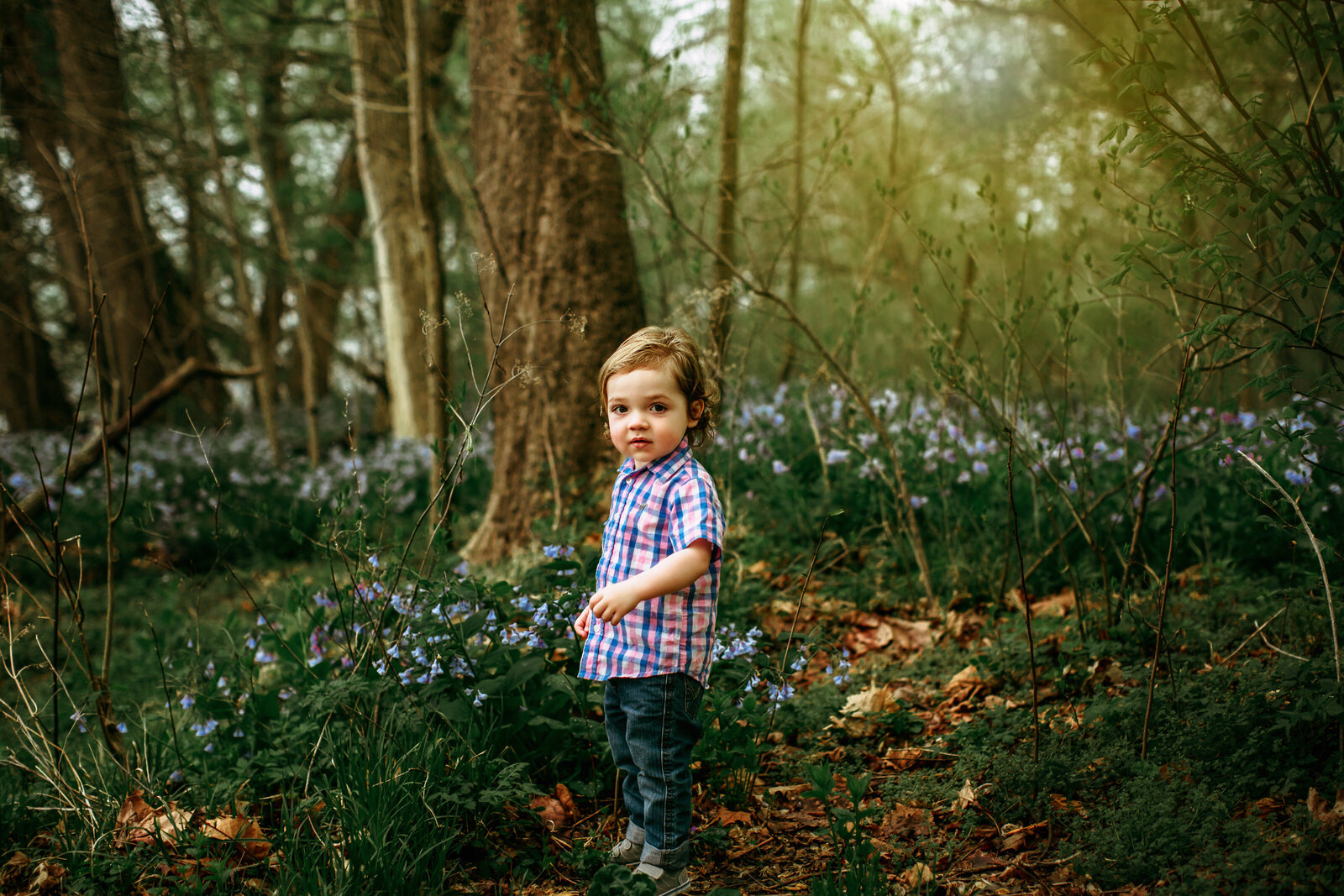 little boy in woods shauna scott photography