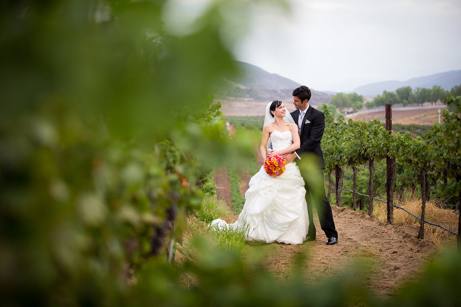 bride and groom in vineyard at leoness cellars