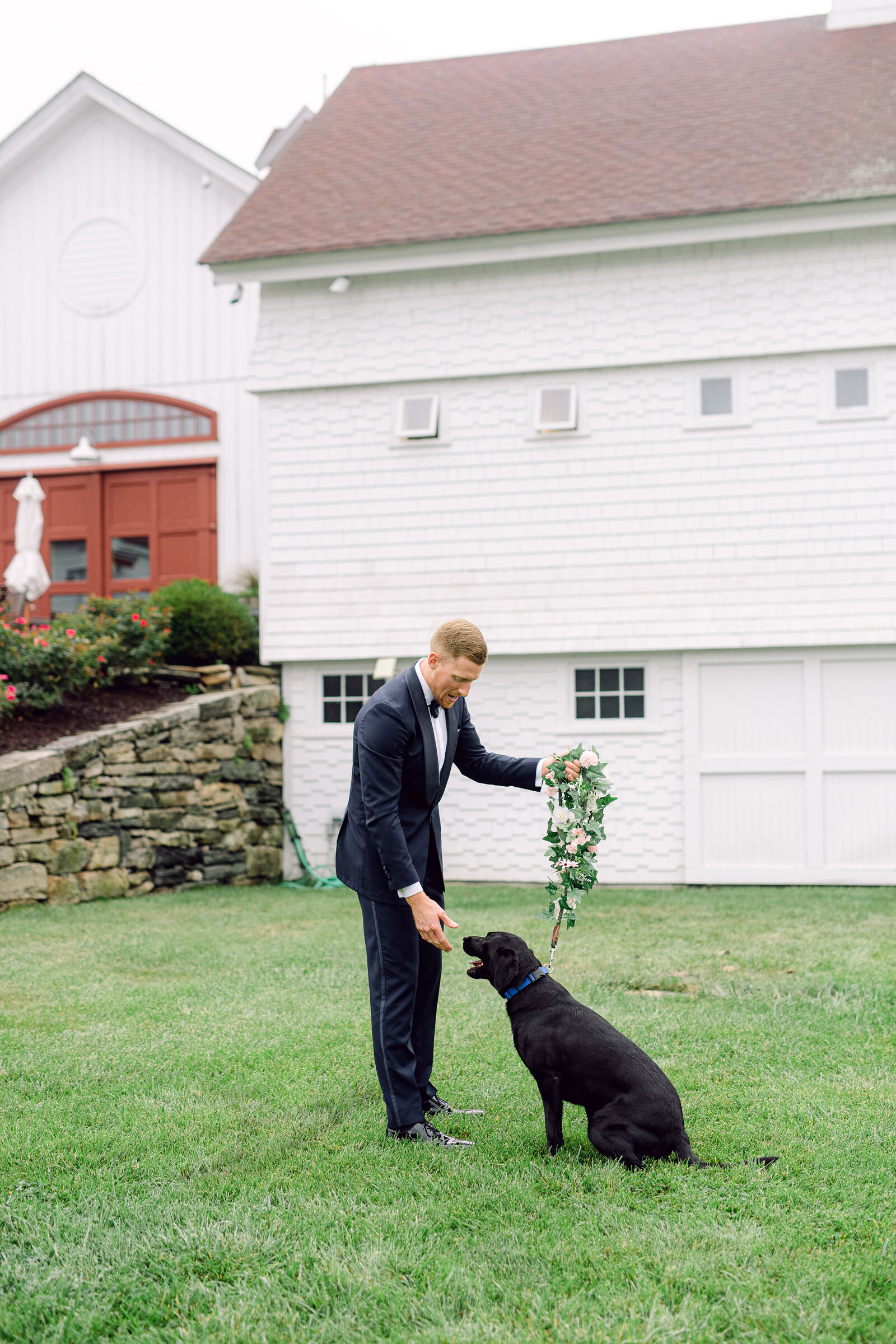 wedding_dog_8