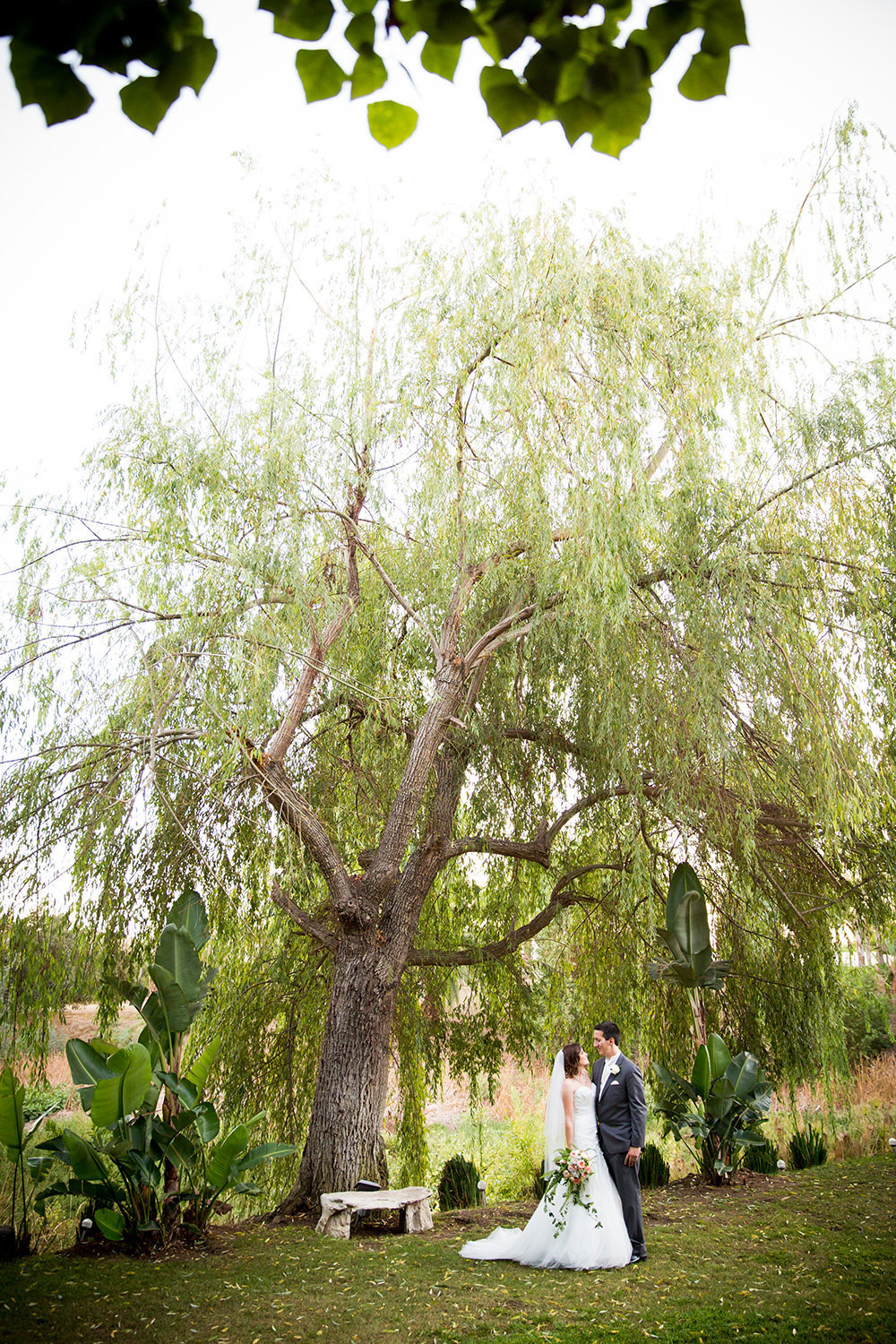 weeping willow tree with bride and groom