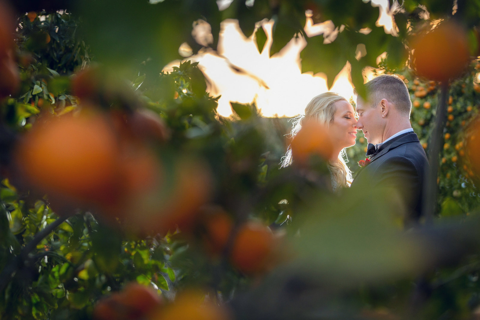 spying on bride and groom between orange trees at newhall mansion