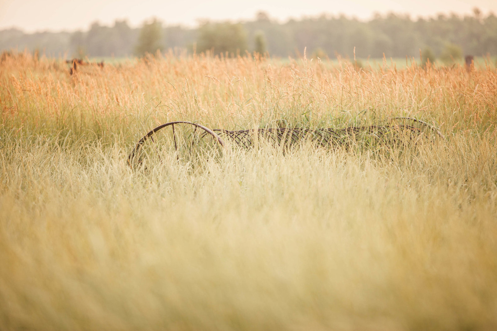 grass-sunrise-wisconsin-farm-country-nature-kate-timbers-photography-2236