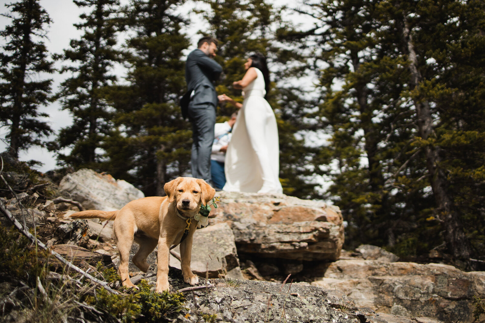 banff.wedding.photographer-7708