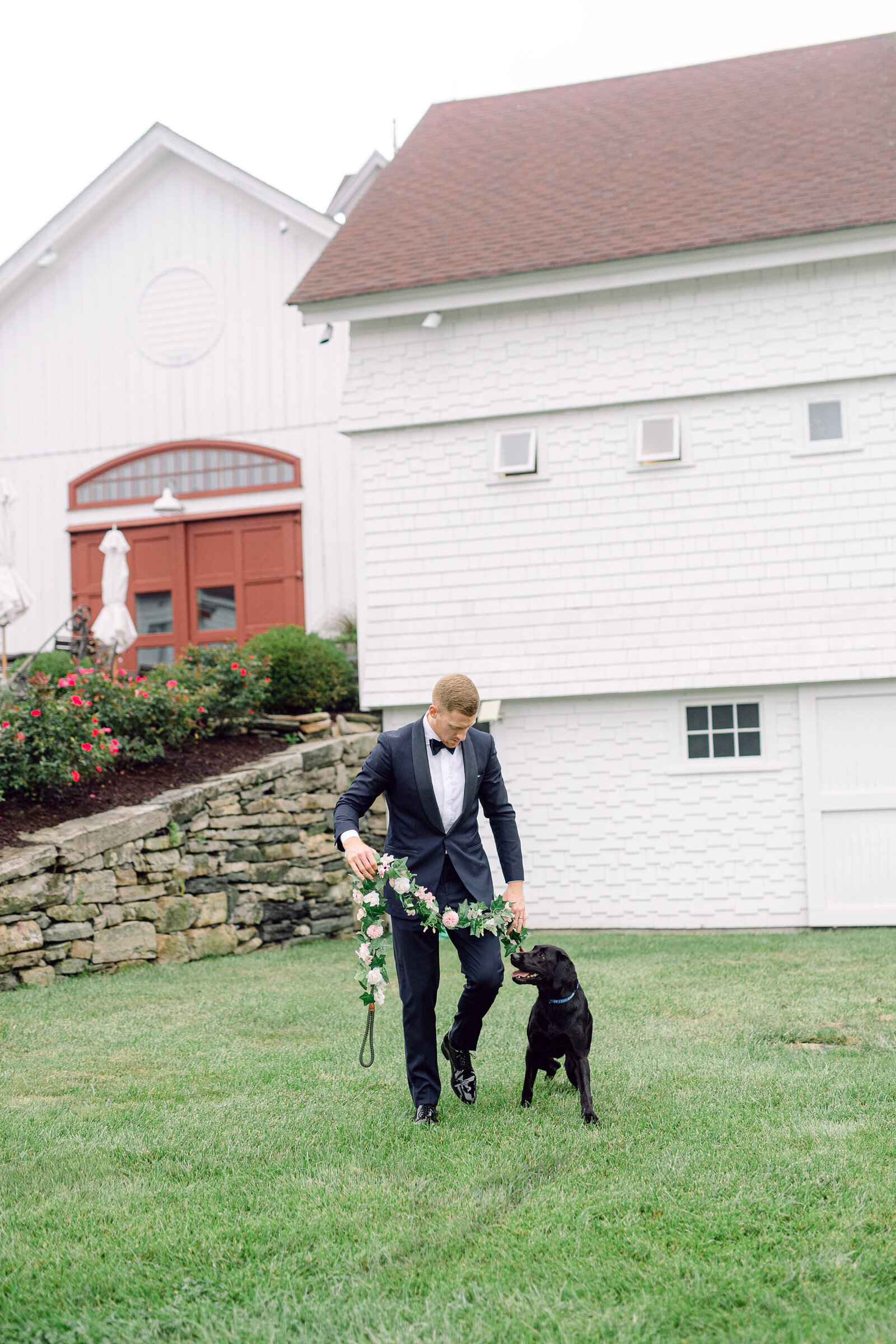 wedding_dog_7