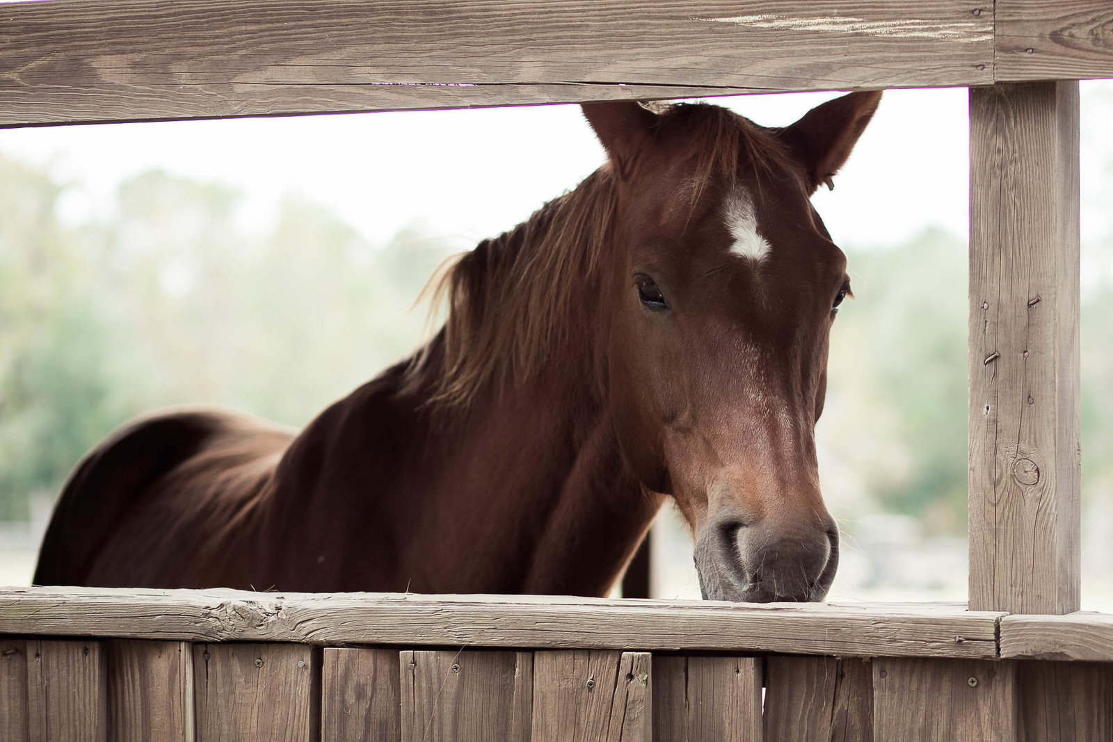 Horse stands in stable, Boals Farm, Charleston, South Carolina