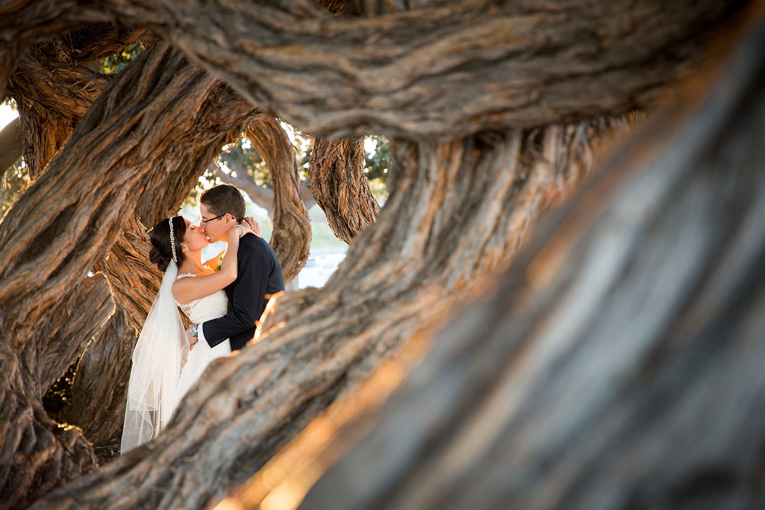 bride and groom kissing by tree at admiral kidd club
