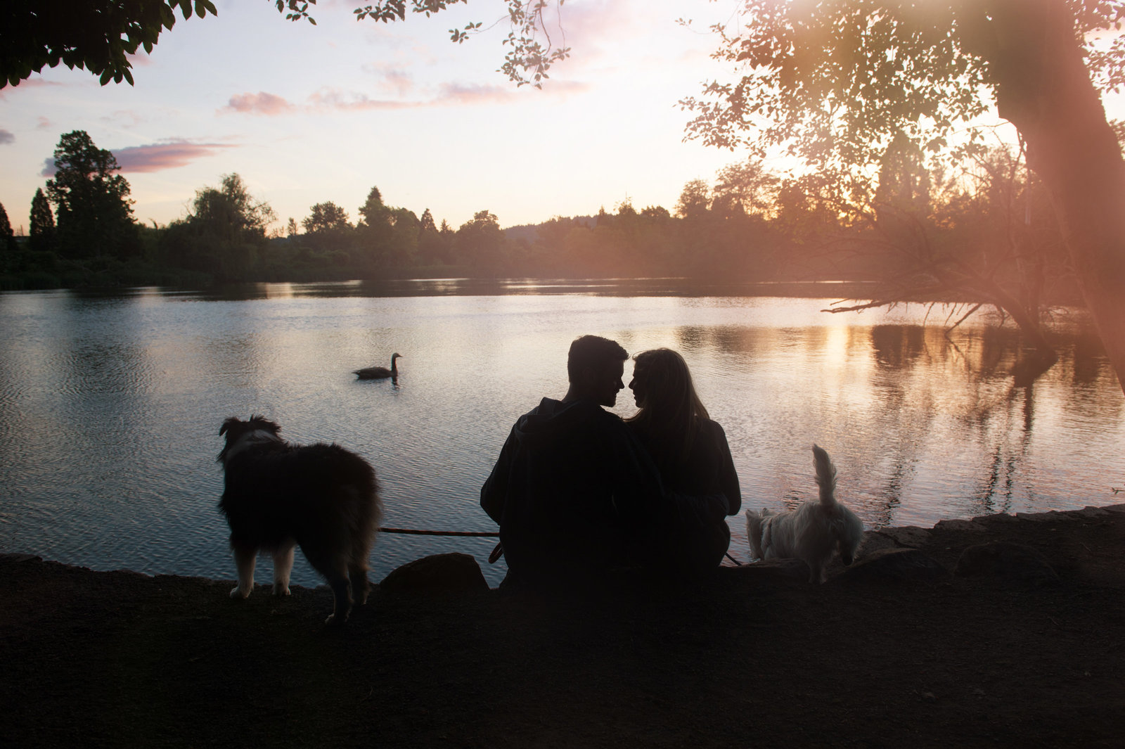 a silhouetted couple sit in front of the lake at crystal springs rhododendron gardens with their dog