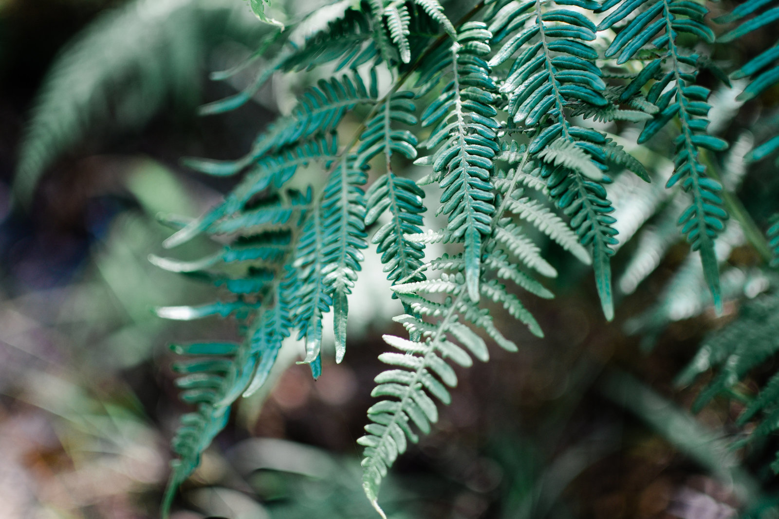 fern-leaf-lead-images (1 of 1)