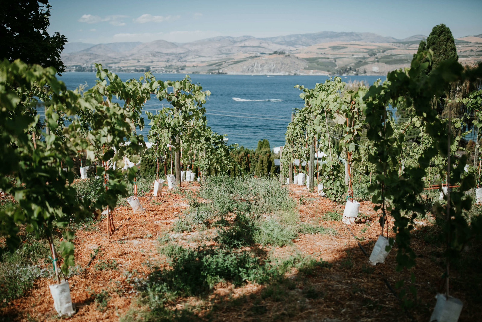 Siren-Song-wedding-lake-chelan-Ashley+John-APW-H44