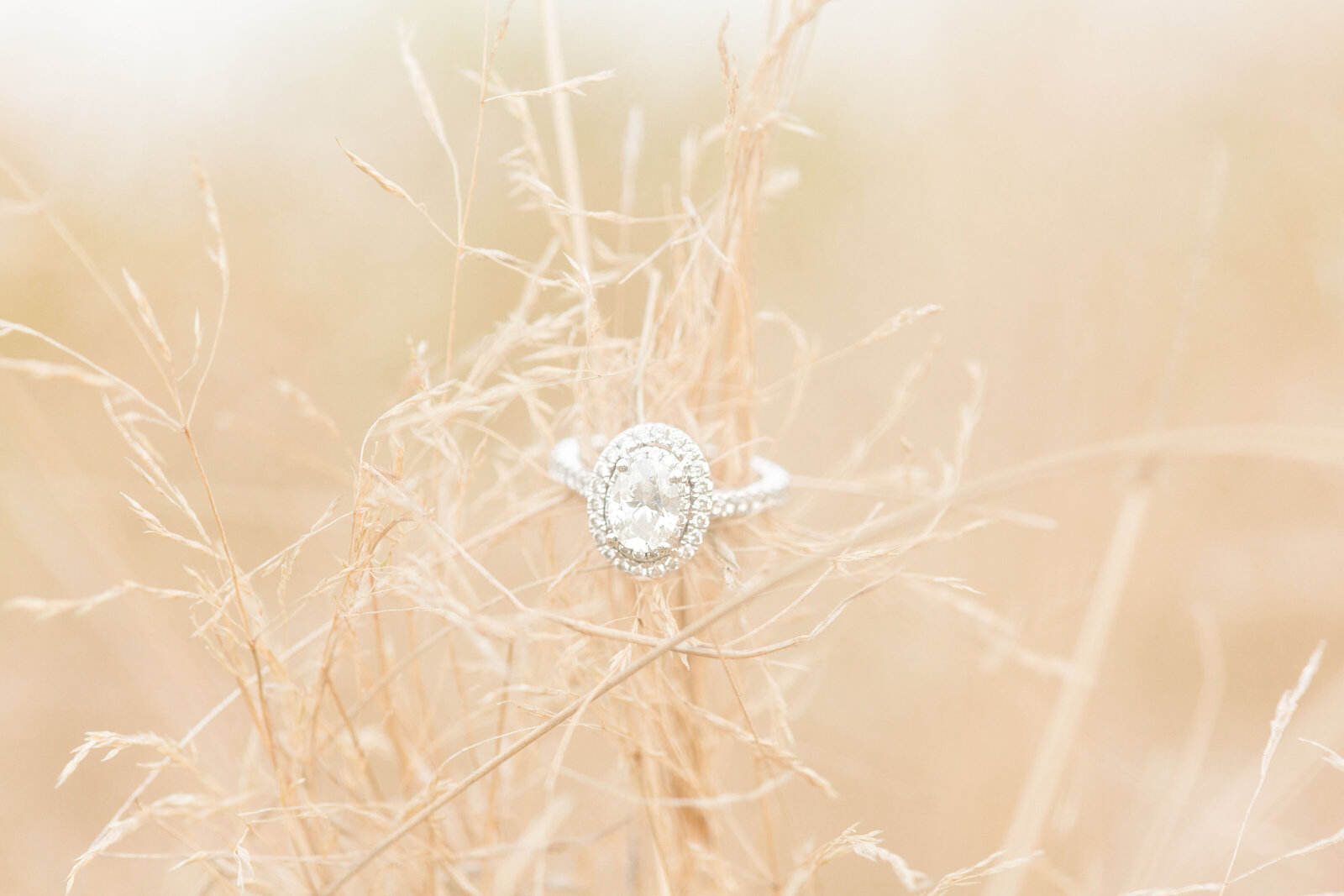 garden-of-the-gods-colorado-engagement-photos257
