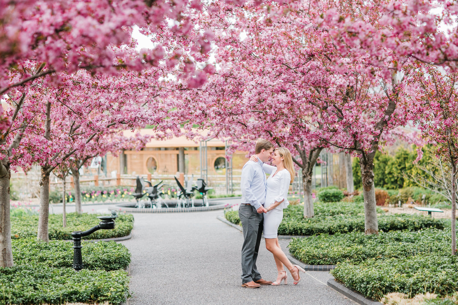 Engagement session with Marcus and Molly under the pink blooming crab apple trees at the Missouri Botanical Gardens