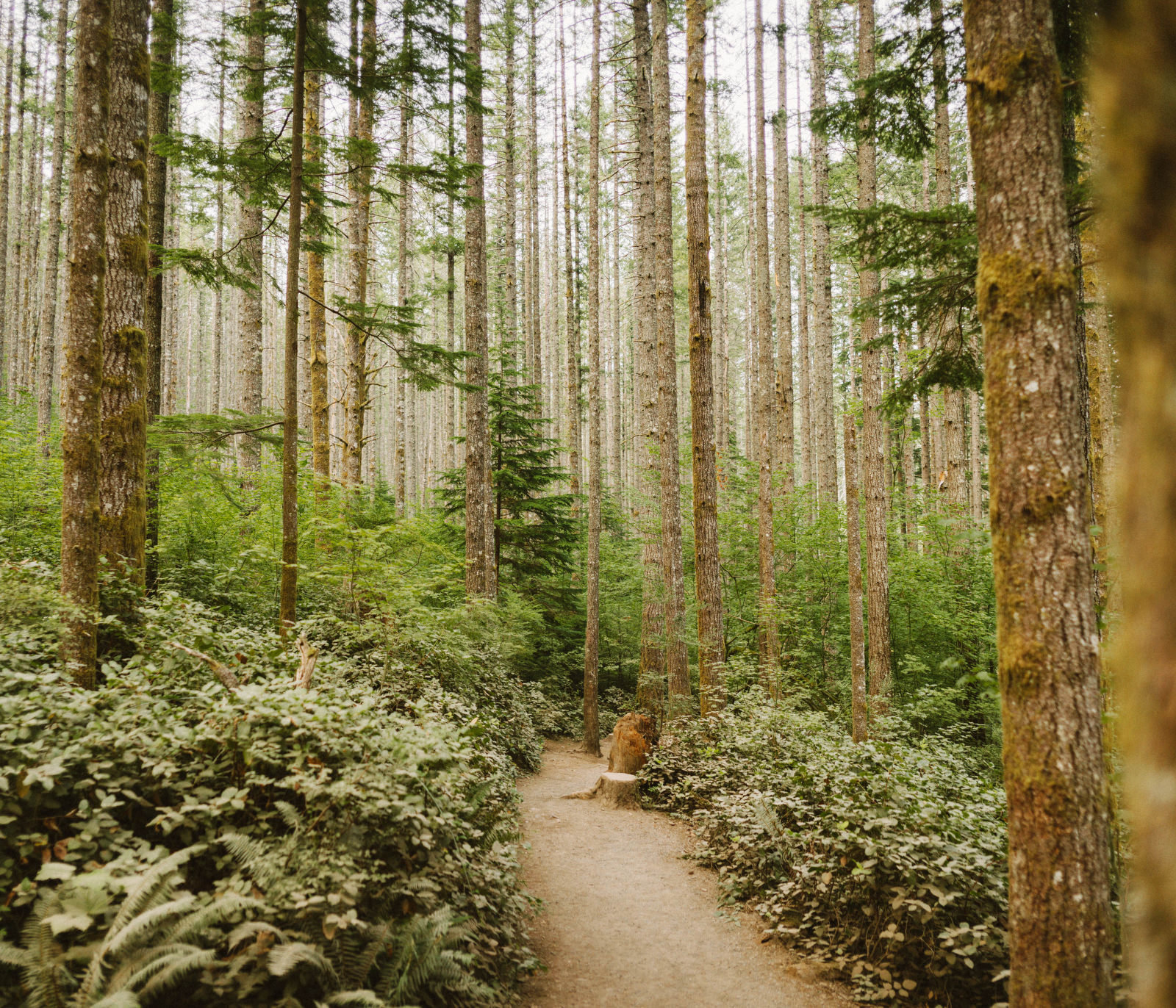 athena-and-camron-seattle-elopement-wedding-benj-haisch-rattlesnake-lake-christian-couple-goals26