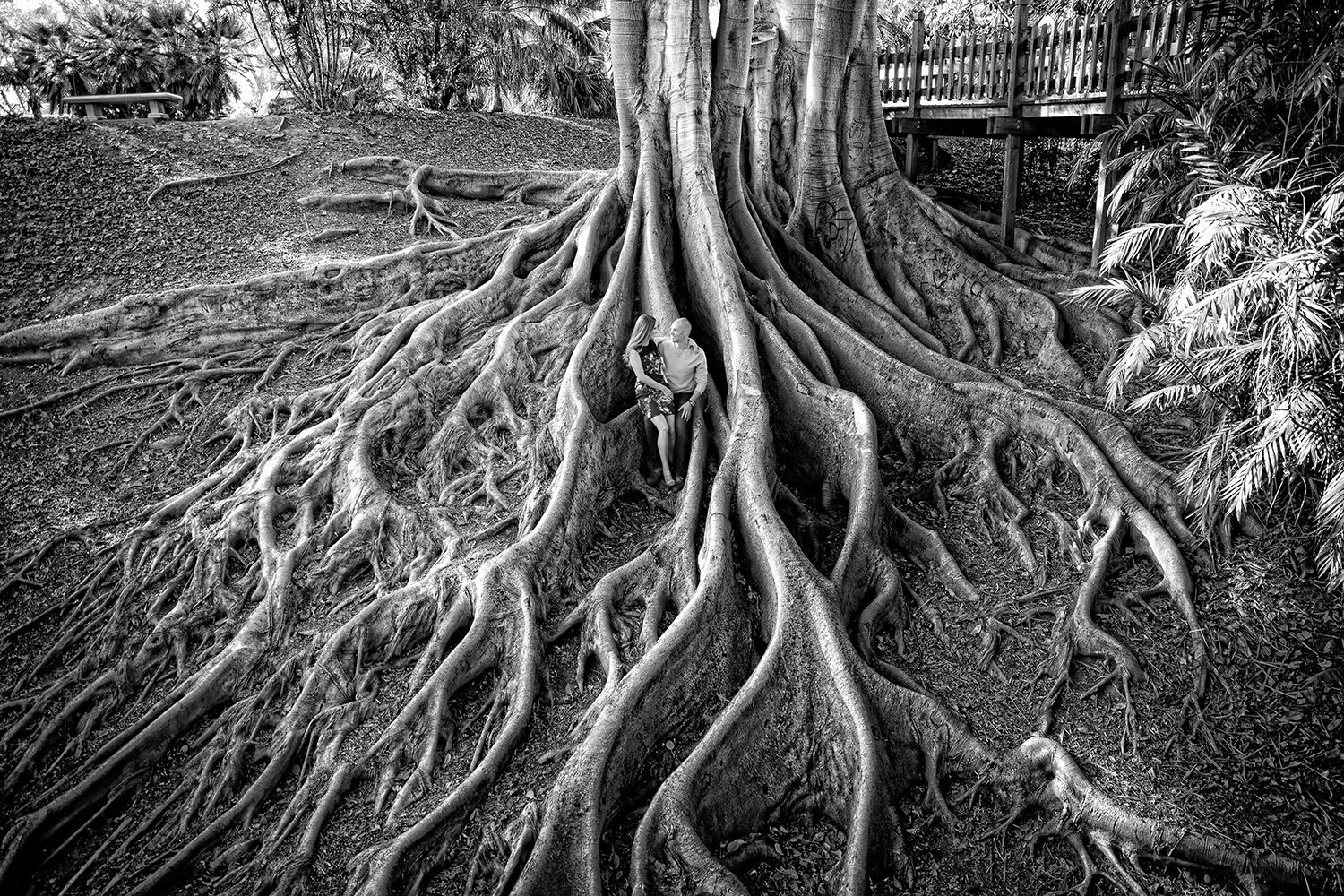 Balboa Park engagement photos black and white root tree