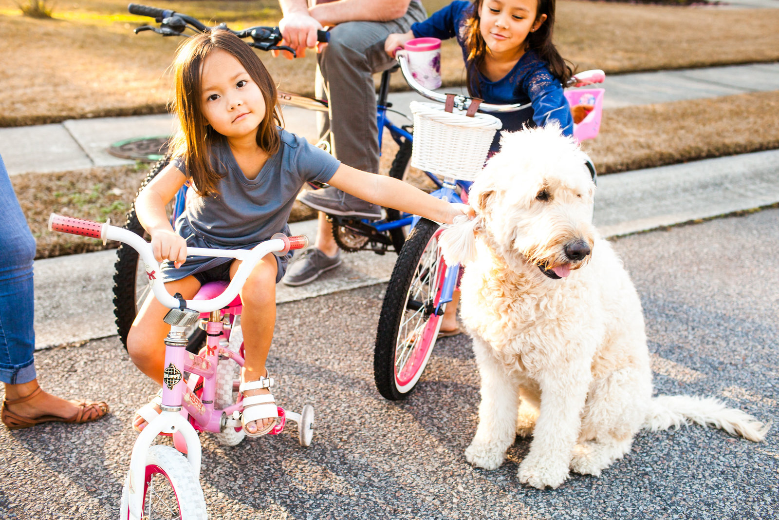 Family riding bikes and playing with dogs at sunset