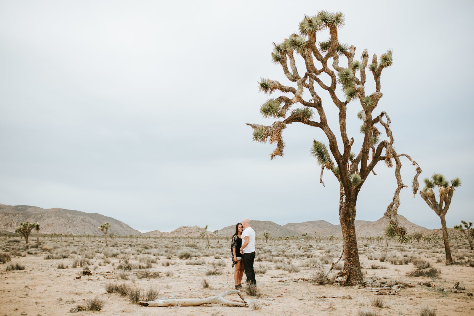 us joshua tree-1