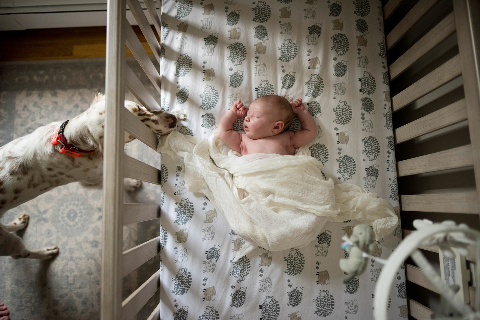 Boston-Newborn-Photographer-Lifestyle-Documentary-Home-Styled-Session-373