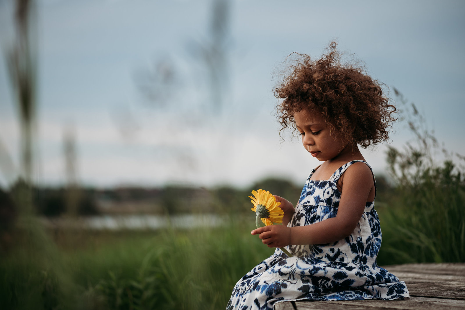 Child in a field holding sunflower at sunset. Madison WI McKenna Patterson Photography
