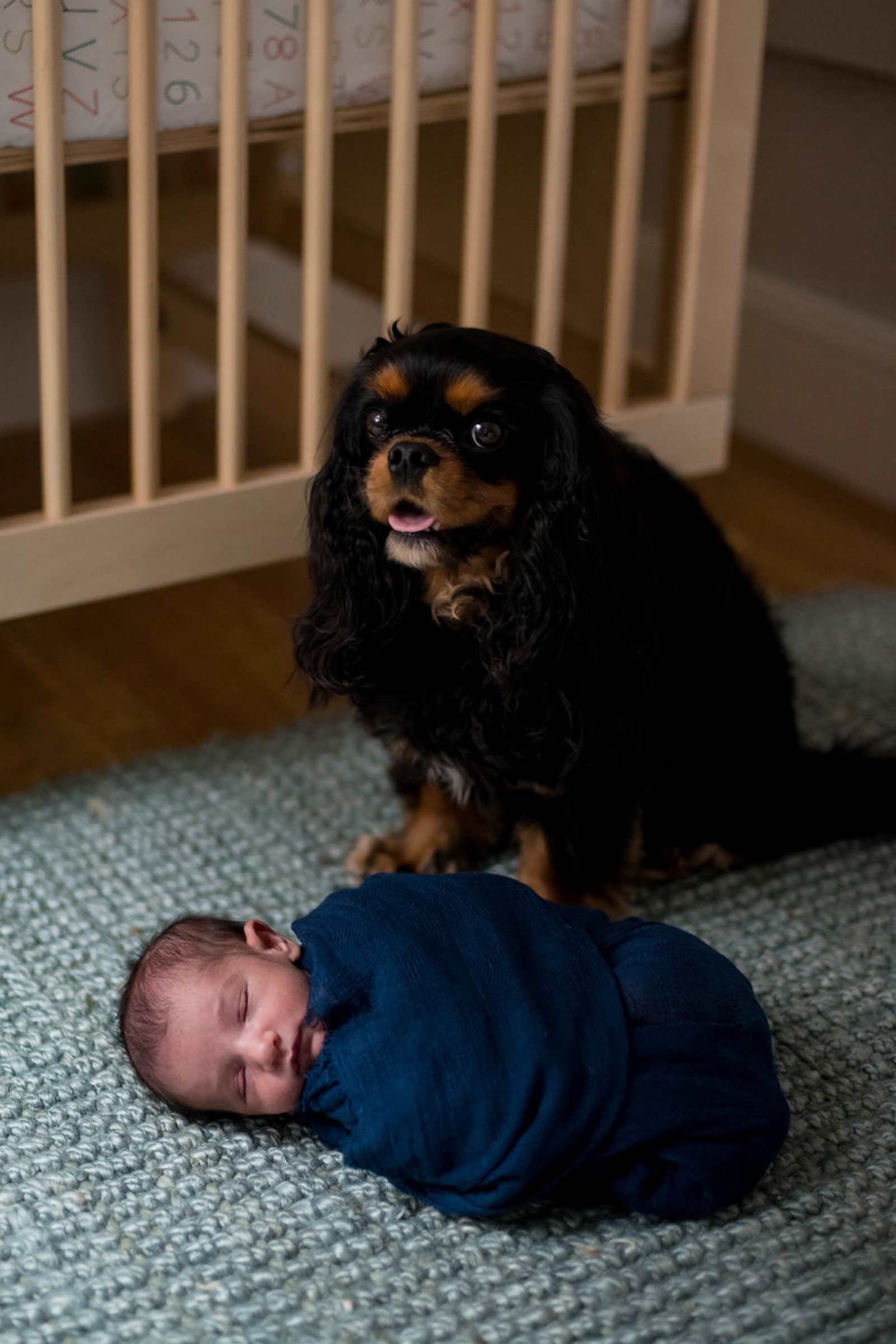 Newborn posed in home with dog in Boston