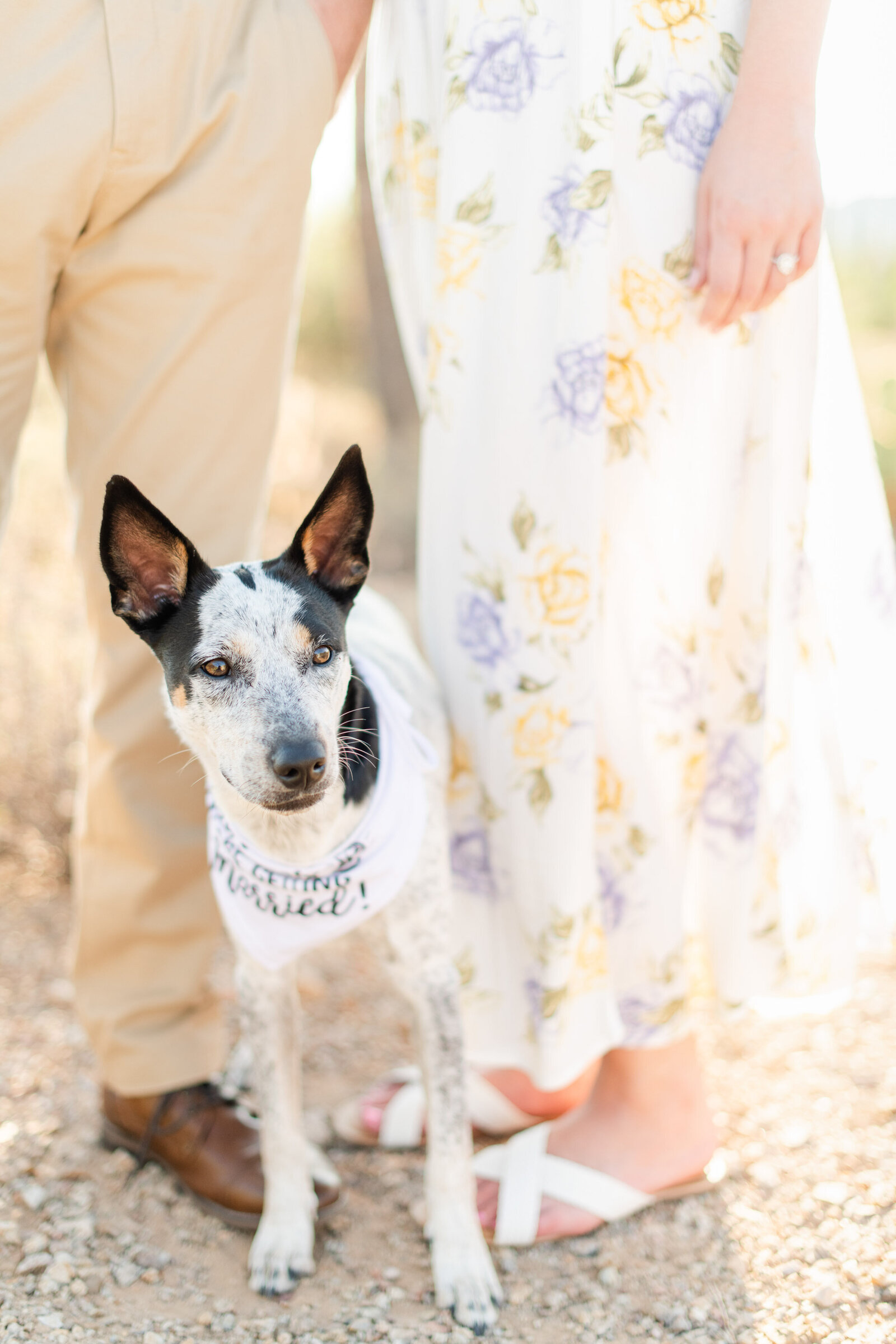engaged couple with dog wearing bandana to announce engagement