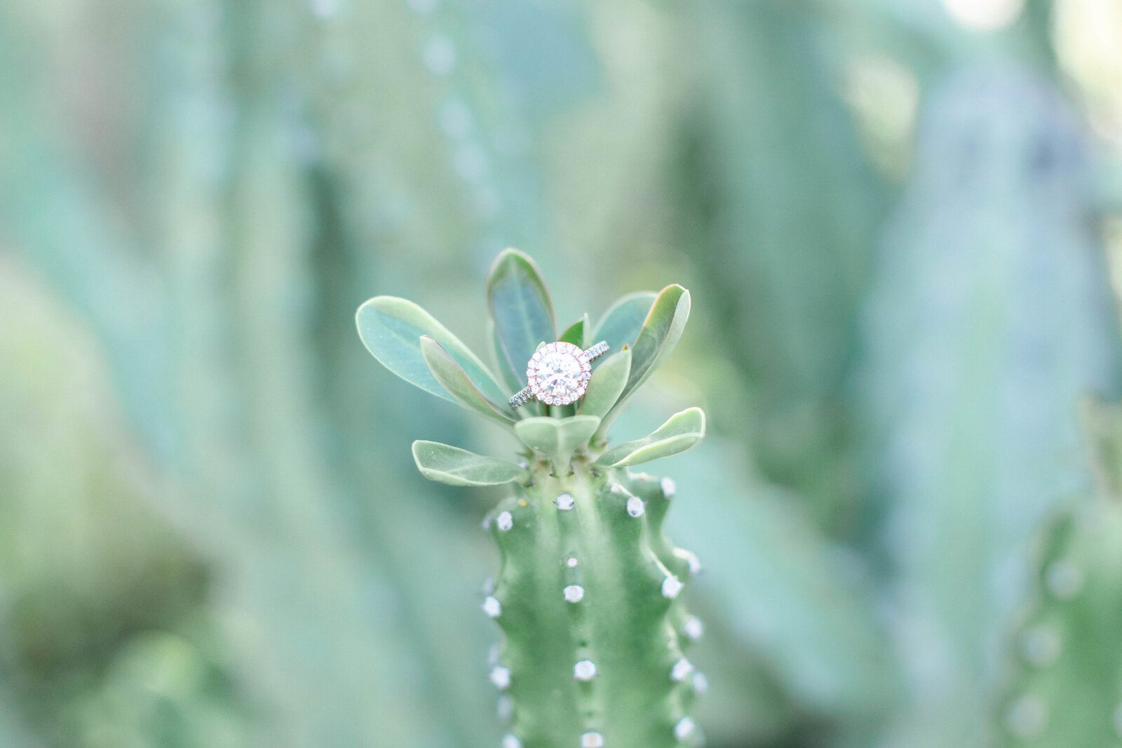 wedding-ring-on-cacti