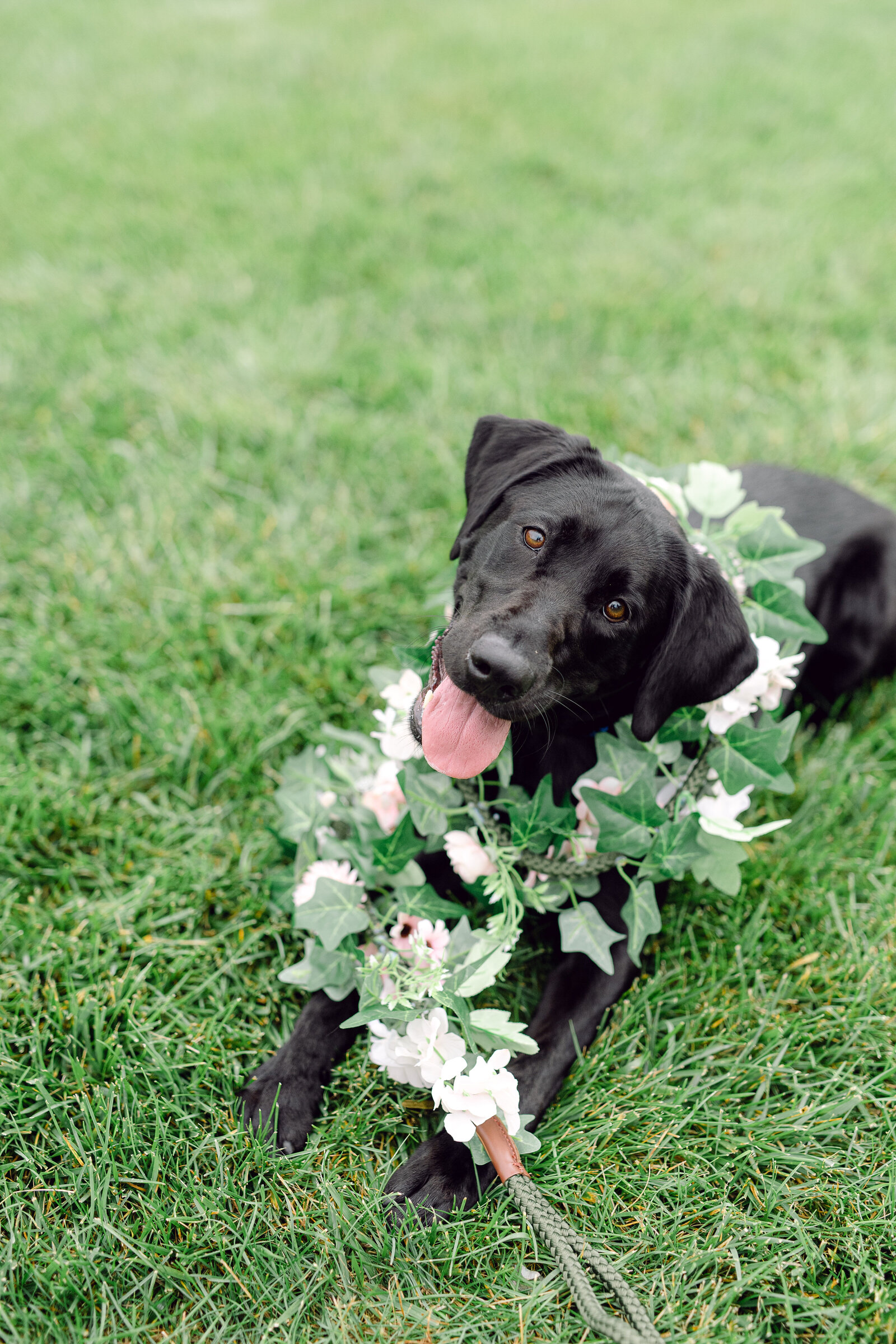 wedding_dog_6