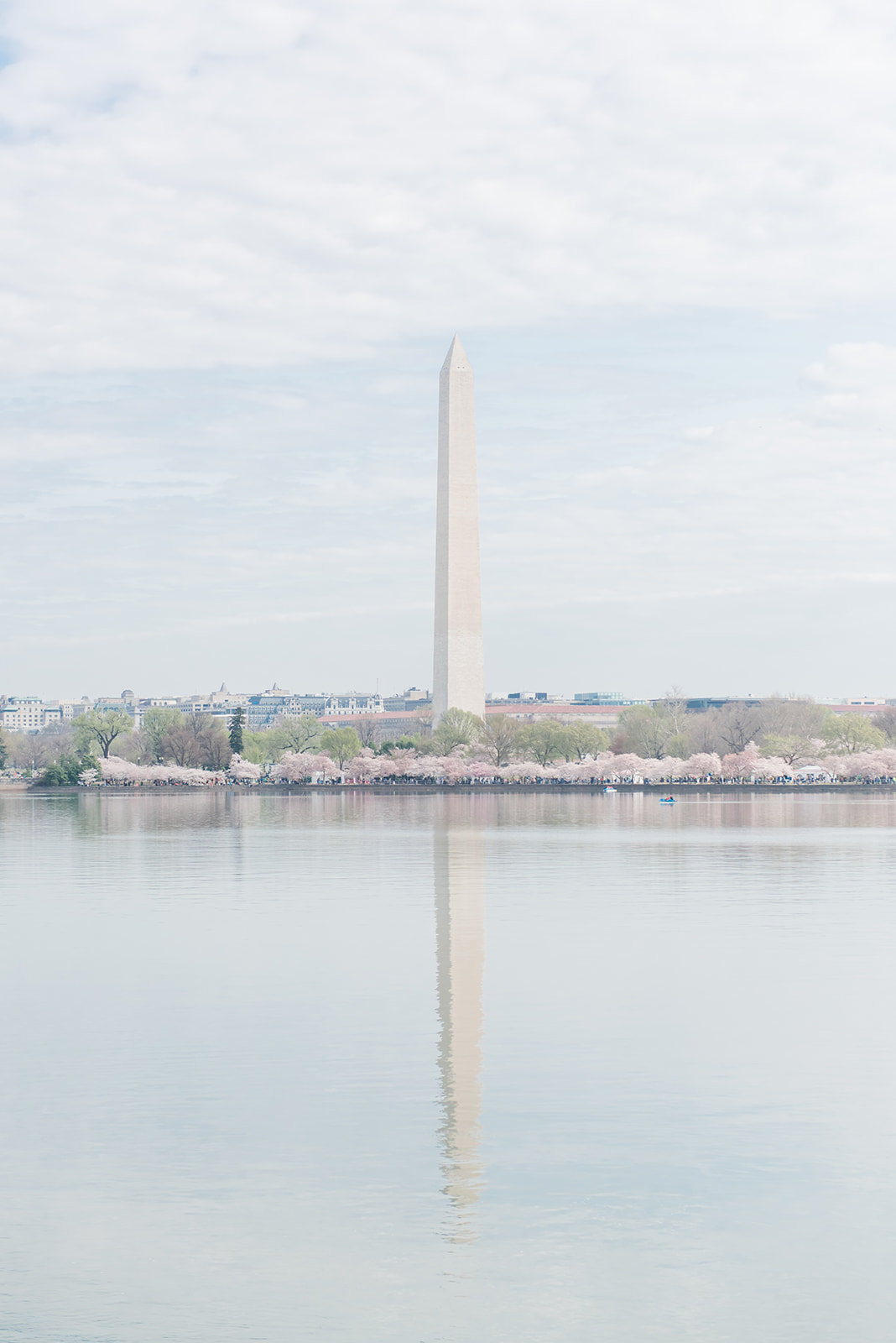 WASHINGTON_DC_CHERRY_BLOSSOMS_L+EJOFFOTO_-178