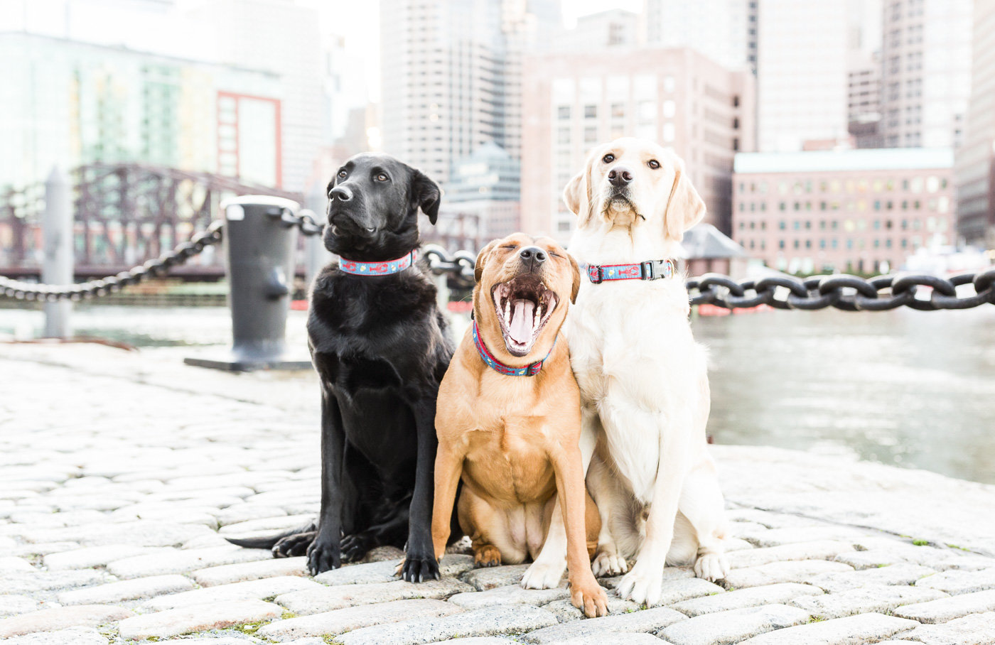 three dogs sitting next to each other with Boston skyline in background