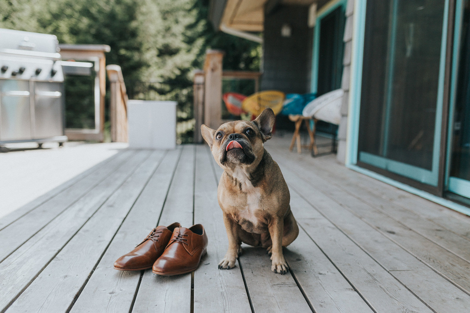 Dog and groom's shoes