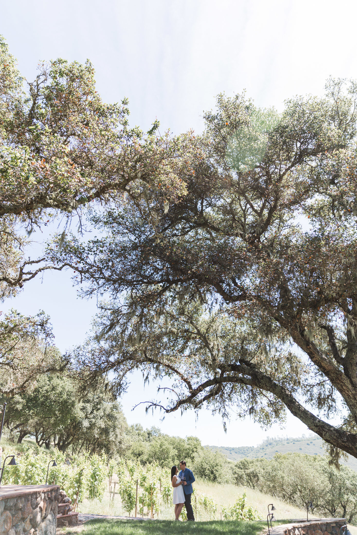 couple at their engagement shoot at kuleto winery under an enormous tree