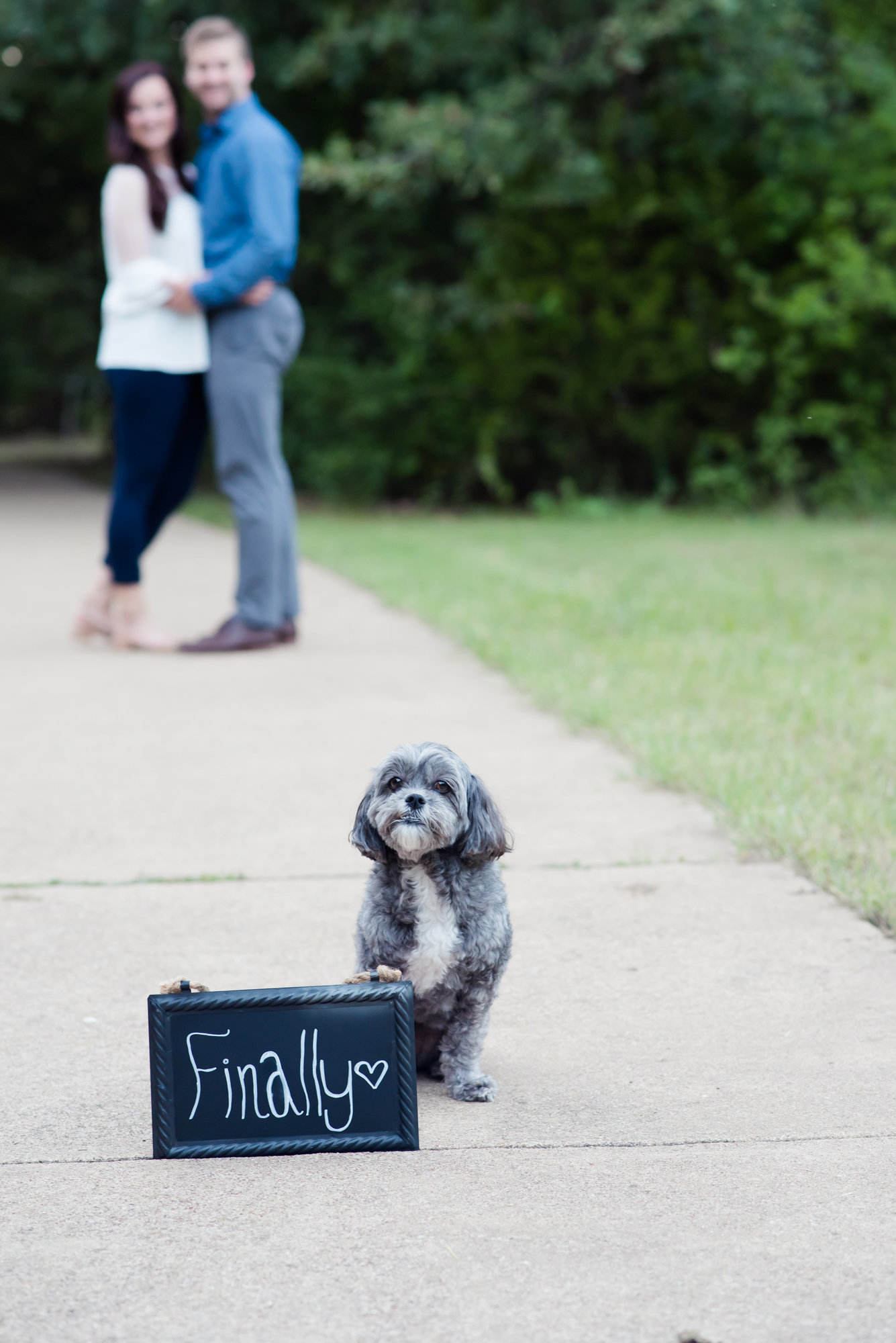 dog in engagement photo