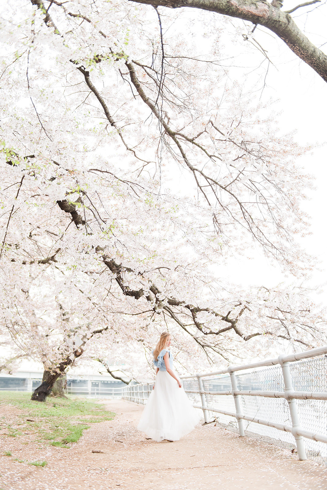 WASHINGTON_DC_CHERRY_BLOSSOMS_L+EJOFFOTO_-103