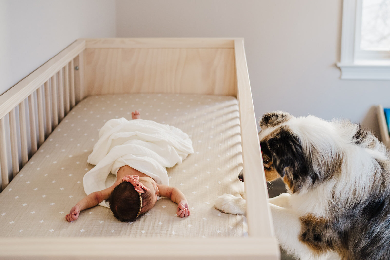 dog peeks into crib where newborn sleeps