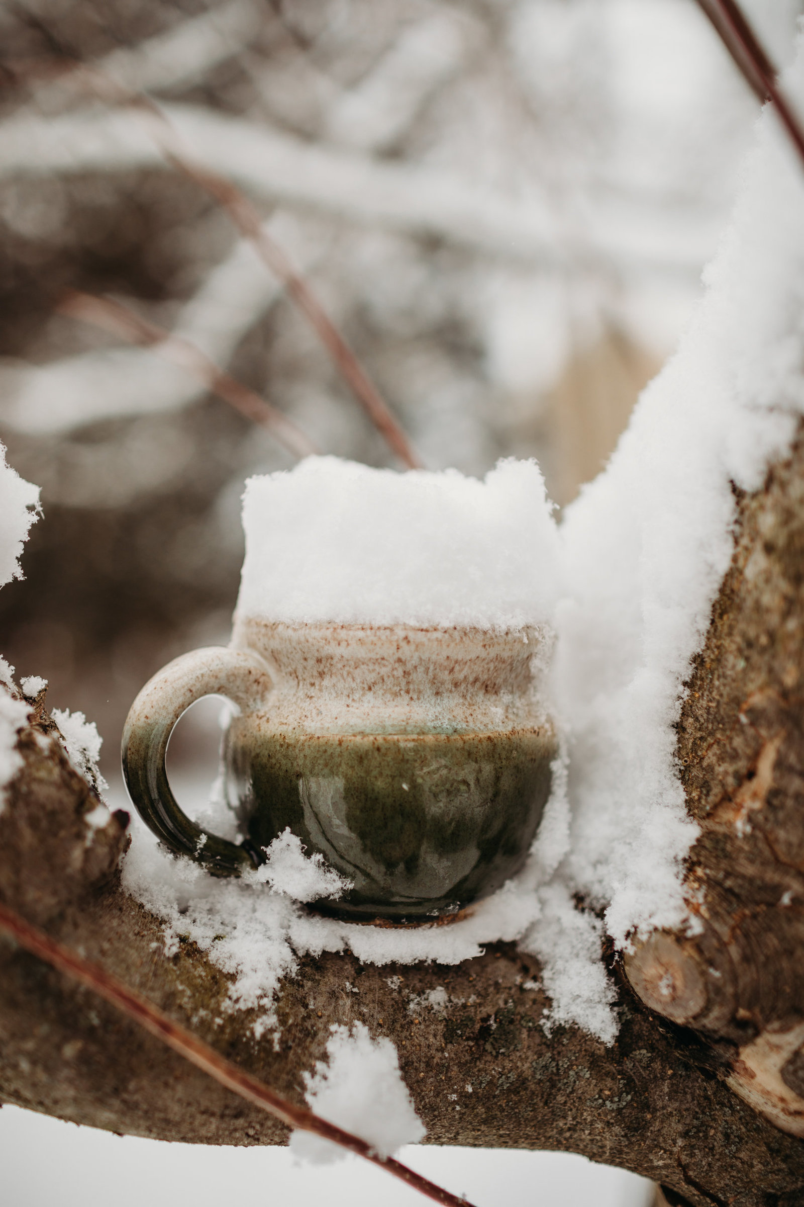 a pottery mug full of snow sits in a snowy tree branch in hopkinton ma