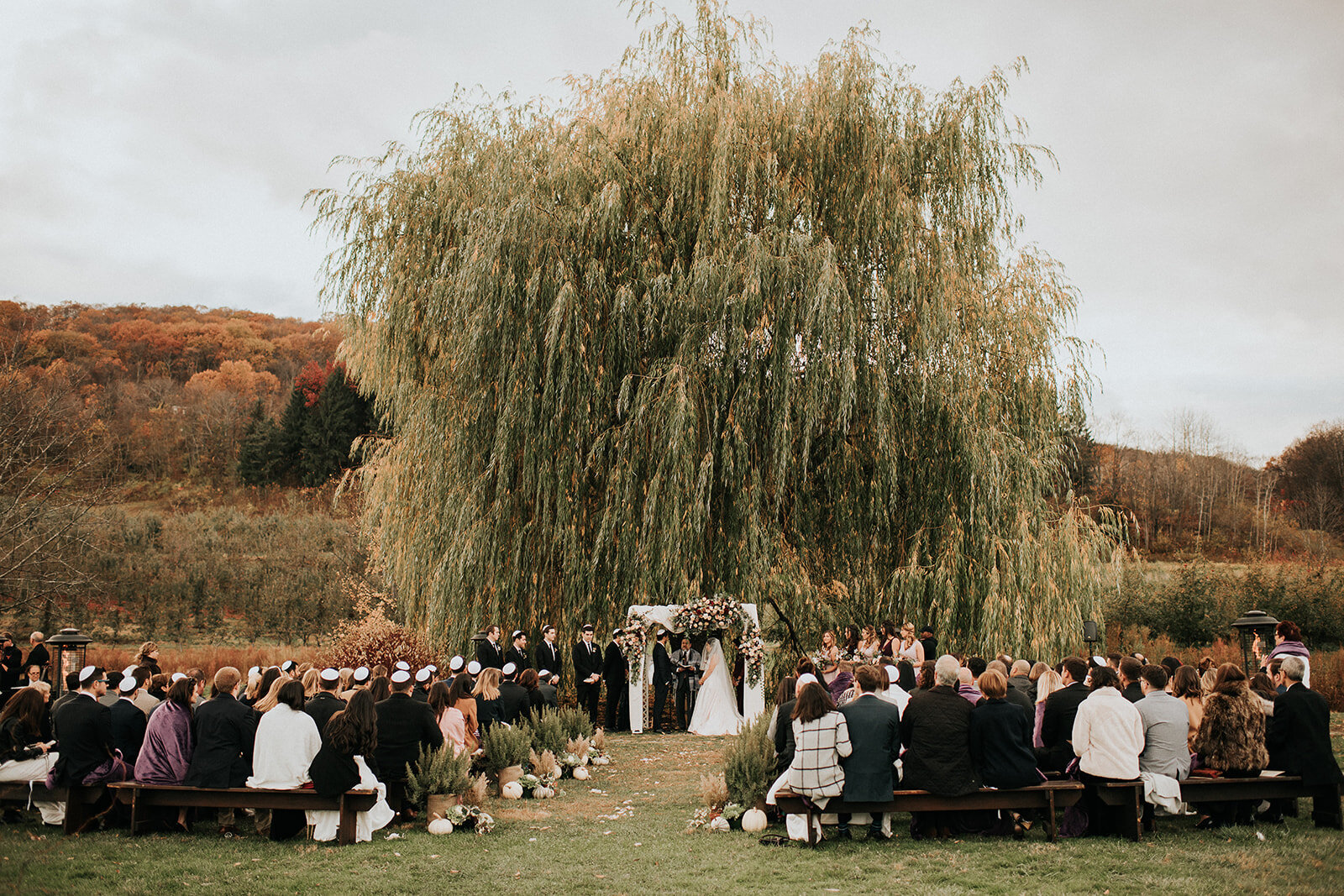 Willow Tree Ceremony Nostrano Vineyards Fall Wedding Hudson Valley Wedding Planner Canvas Weddings