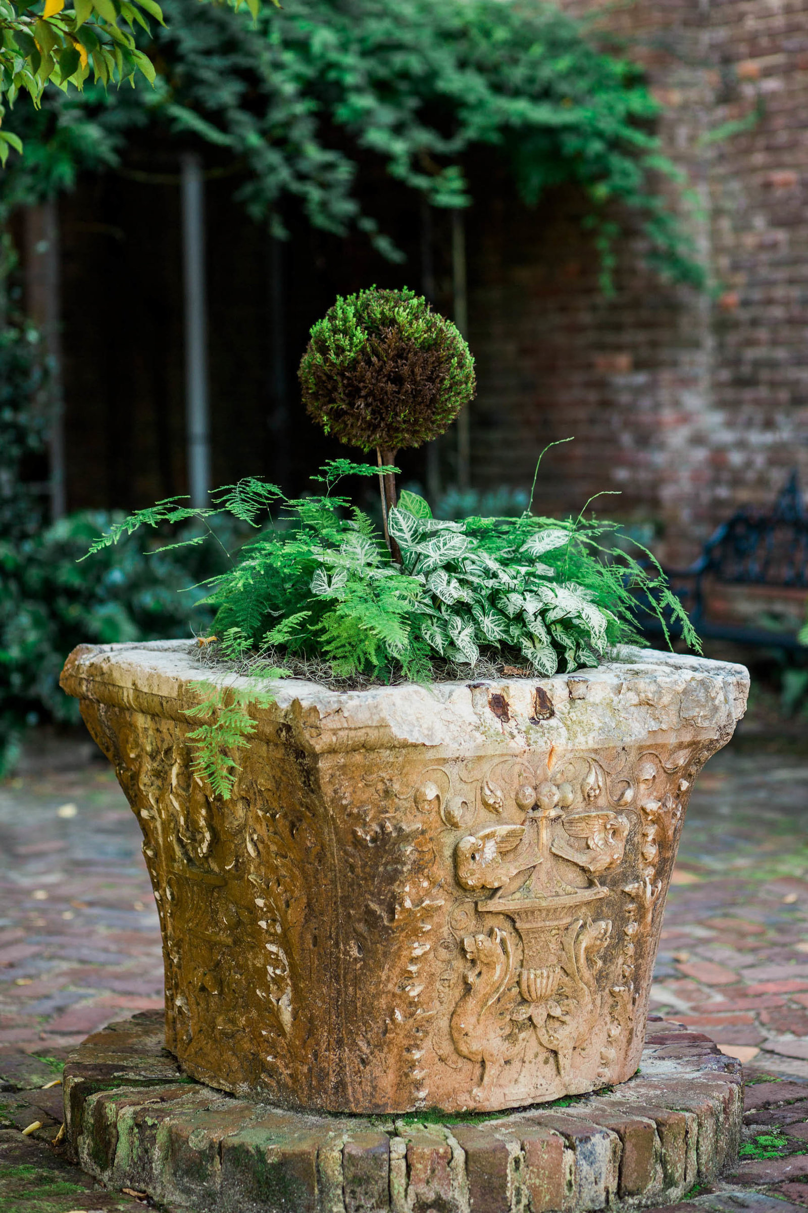 Plant is in open courtyard, Boone Hall Plantation, Charleston, South Carolina
