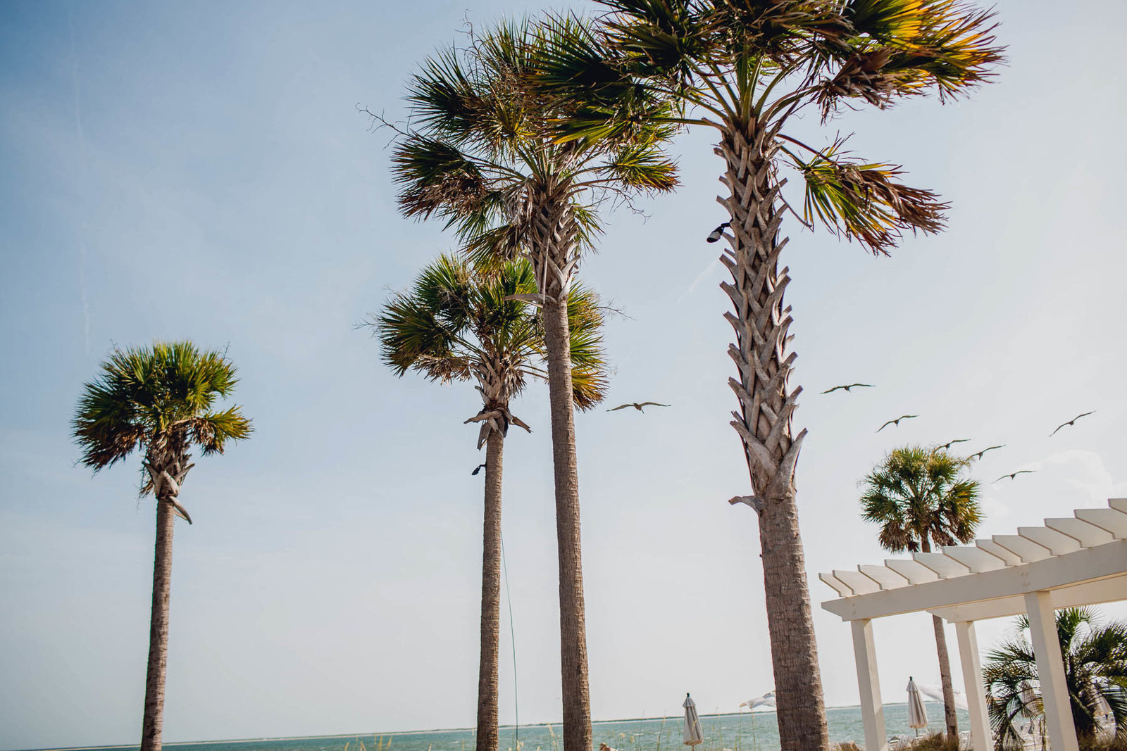Ceremony is set up by palm trees, Seabrook Island Club, Charleston Wedding Photography.