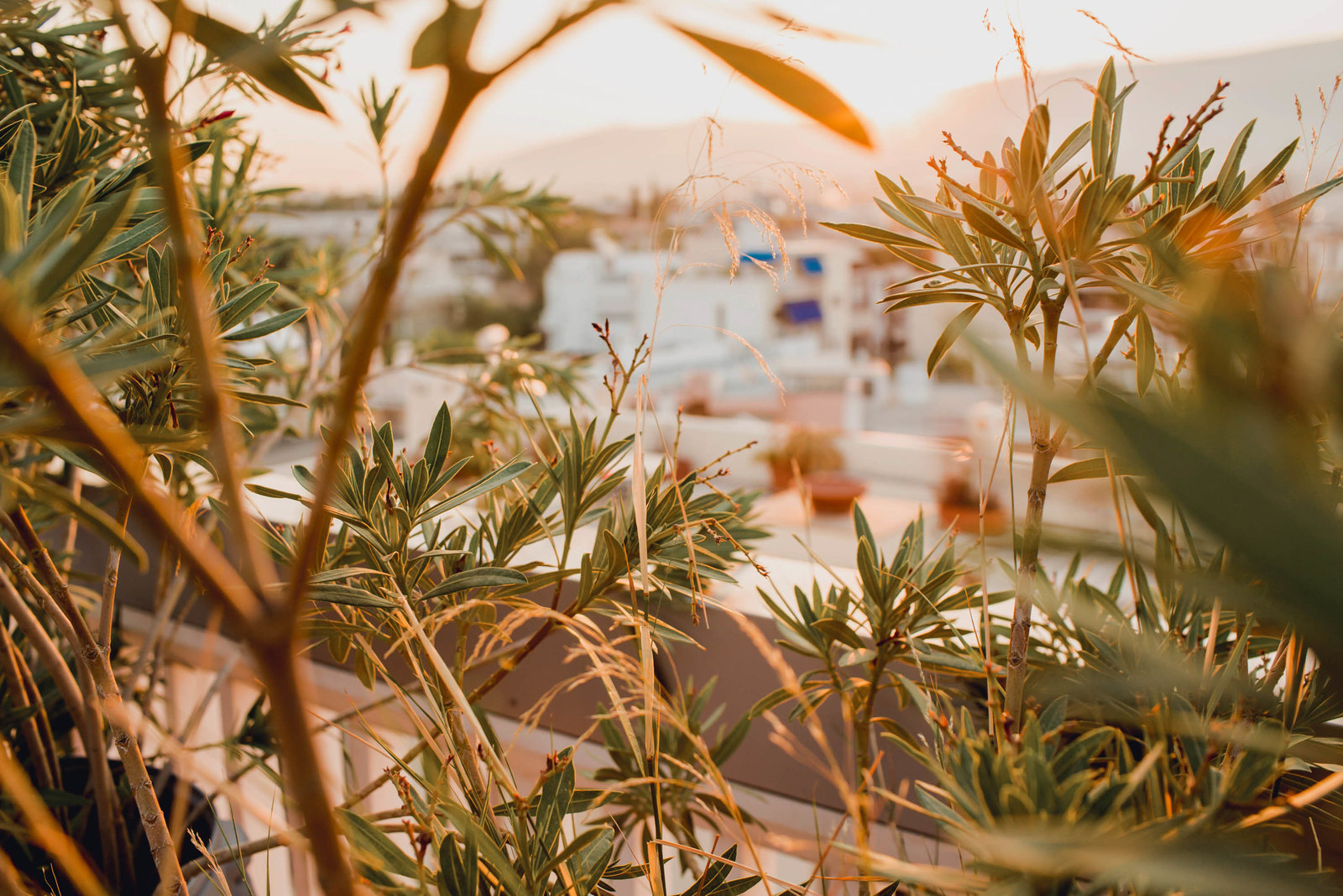 sunrise-plants-athens-greece-travel-kate-timbers-photography-863