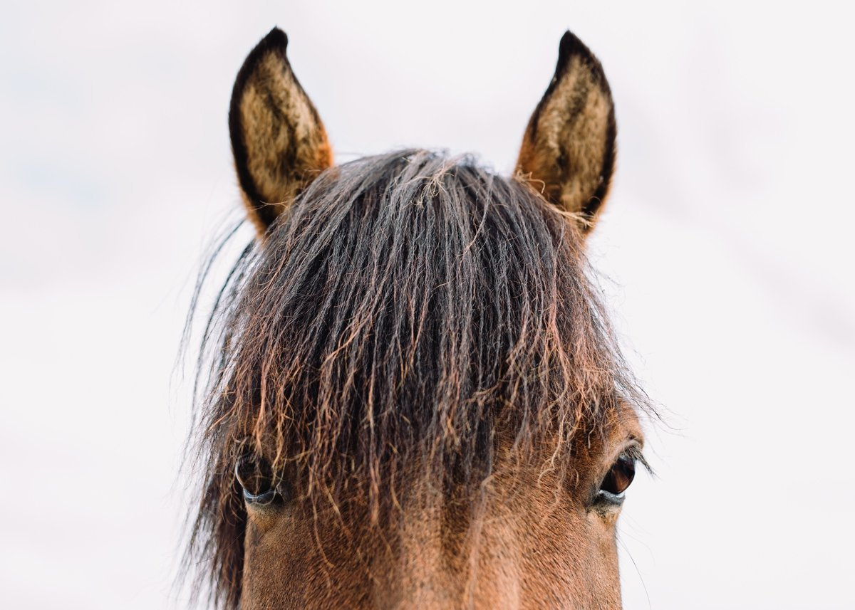 icelandic-horses-seattle-travel-photographer-cameron-zegers