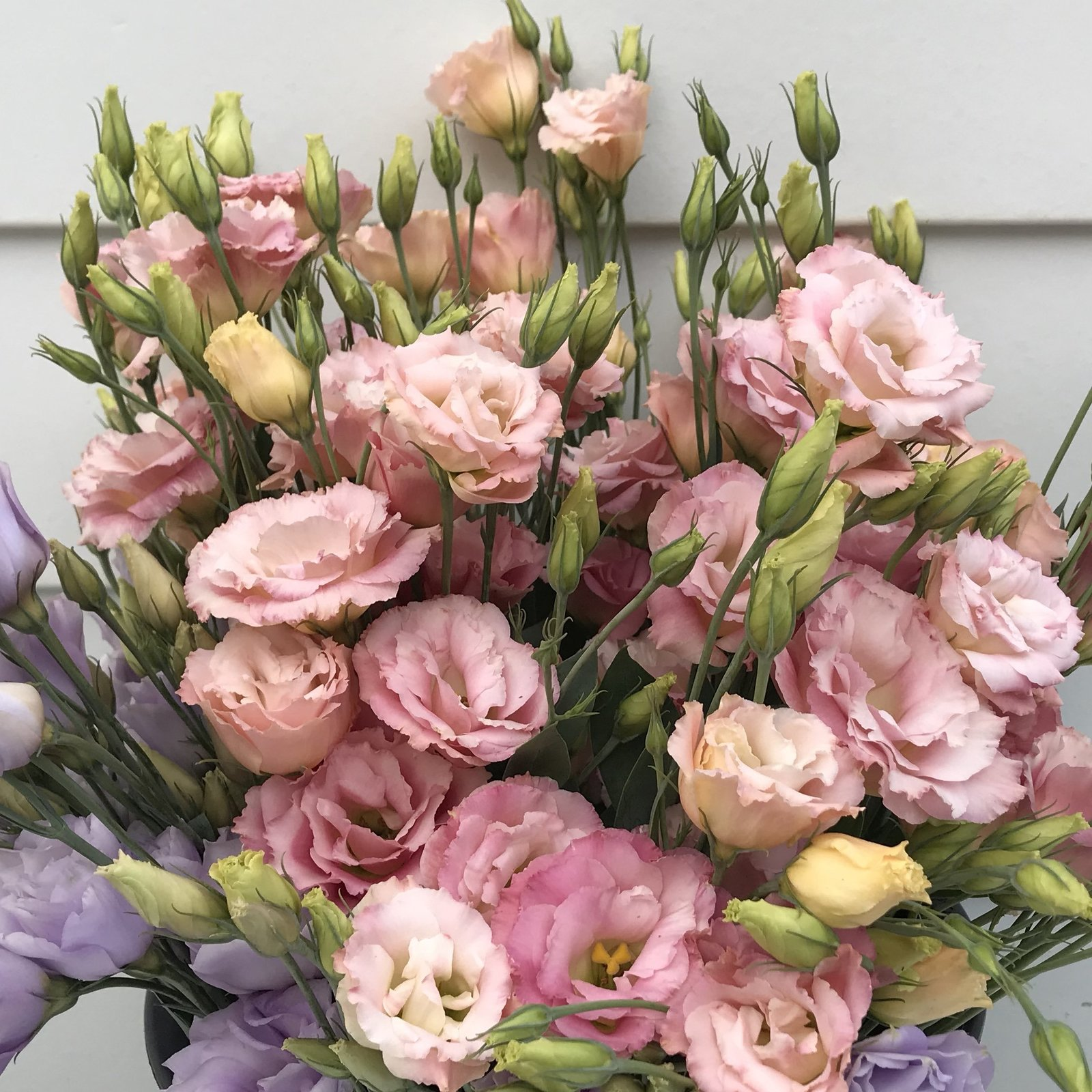 ChesBlooms Lisianthus